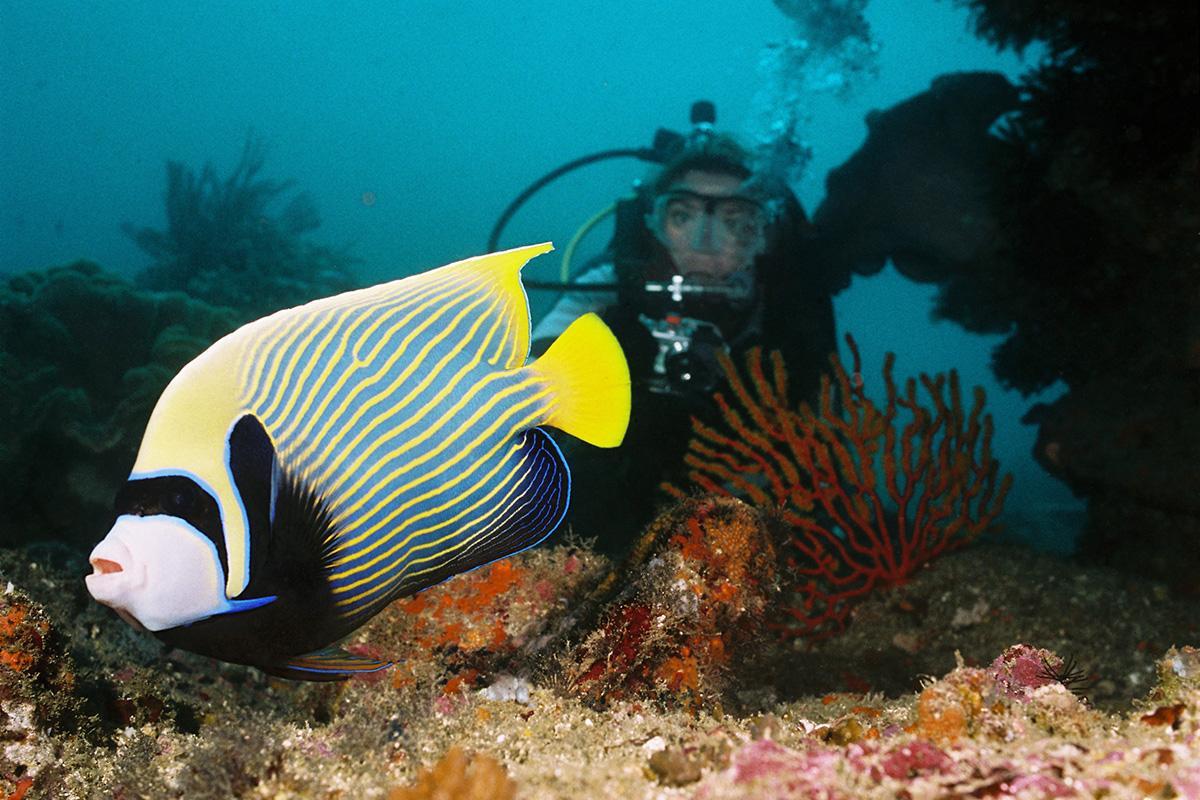 Scuba Diver and a Fish