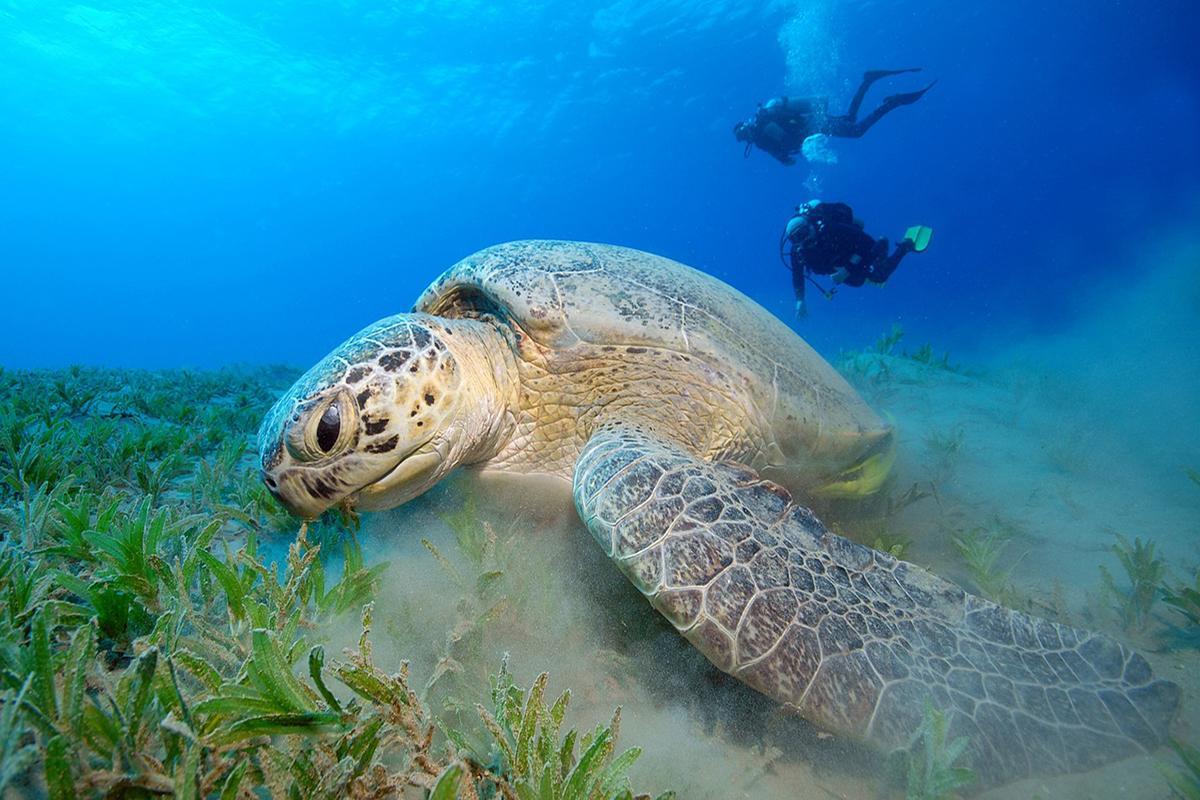 Beginner Underwater Photographer 5 Top tips