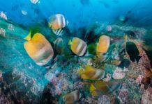 Slowing Things Down Underwater by Mario Vitalini