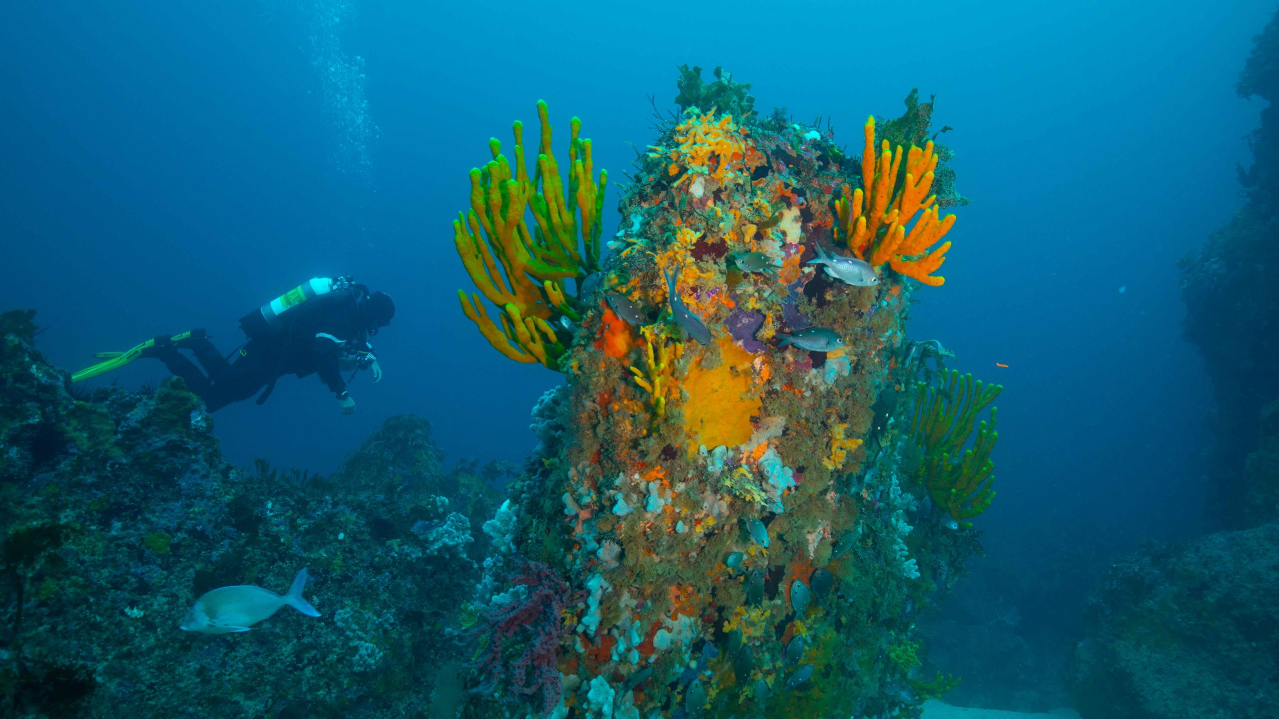 Ngaio Rock sponges