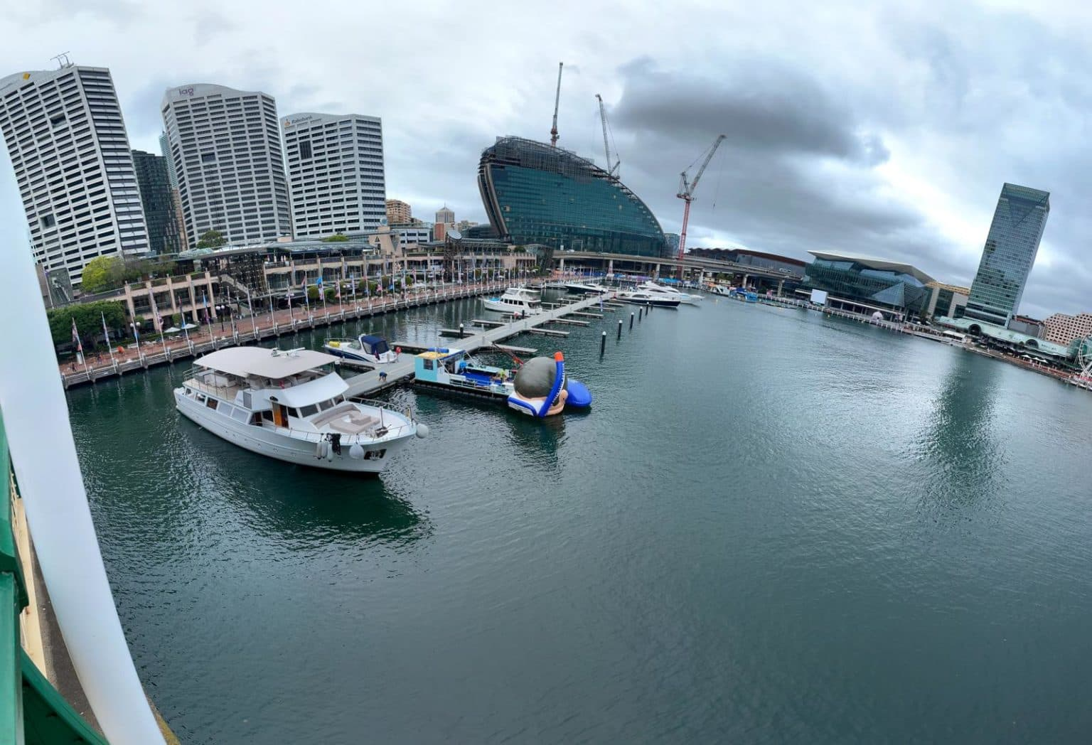 Giant Cairns snorkeller arrives in Sydney