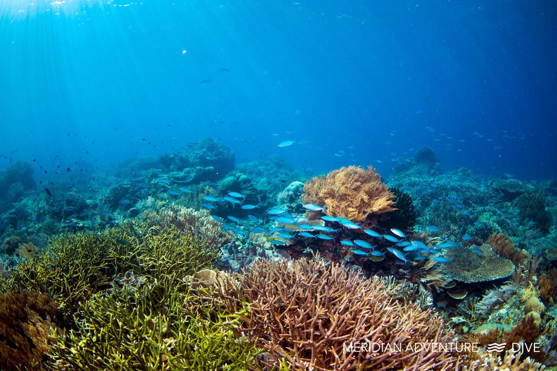 Discover Amazing Diving in Raja Ampat.