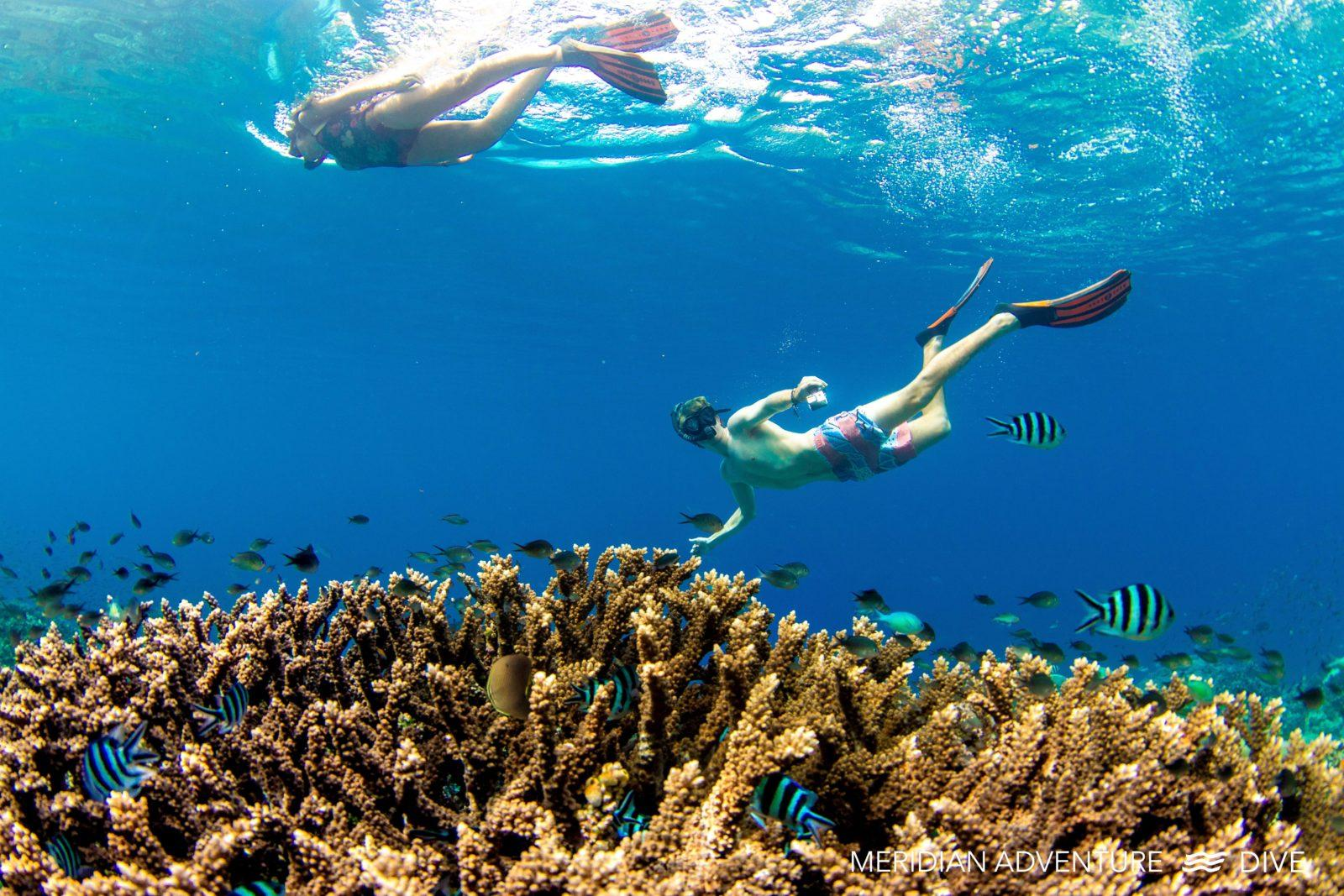 Discover pristine coral reefs when you go diving In Raja Ampat