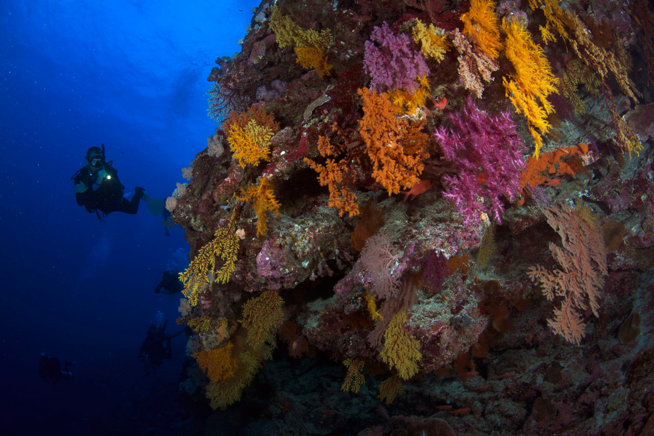 Bougainville reef