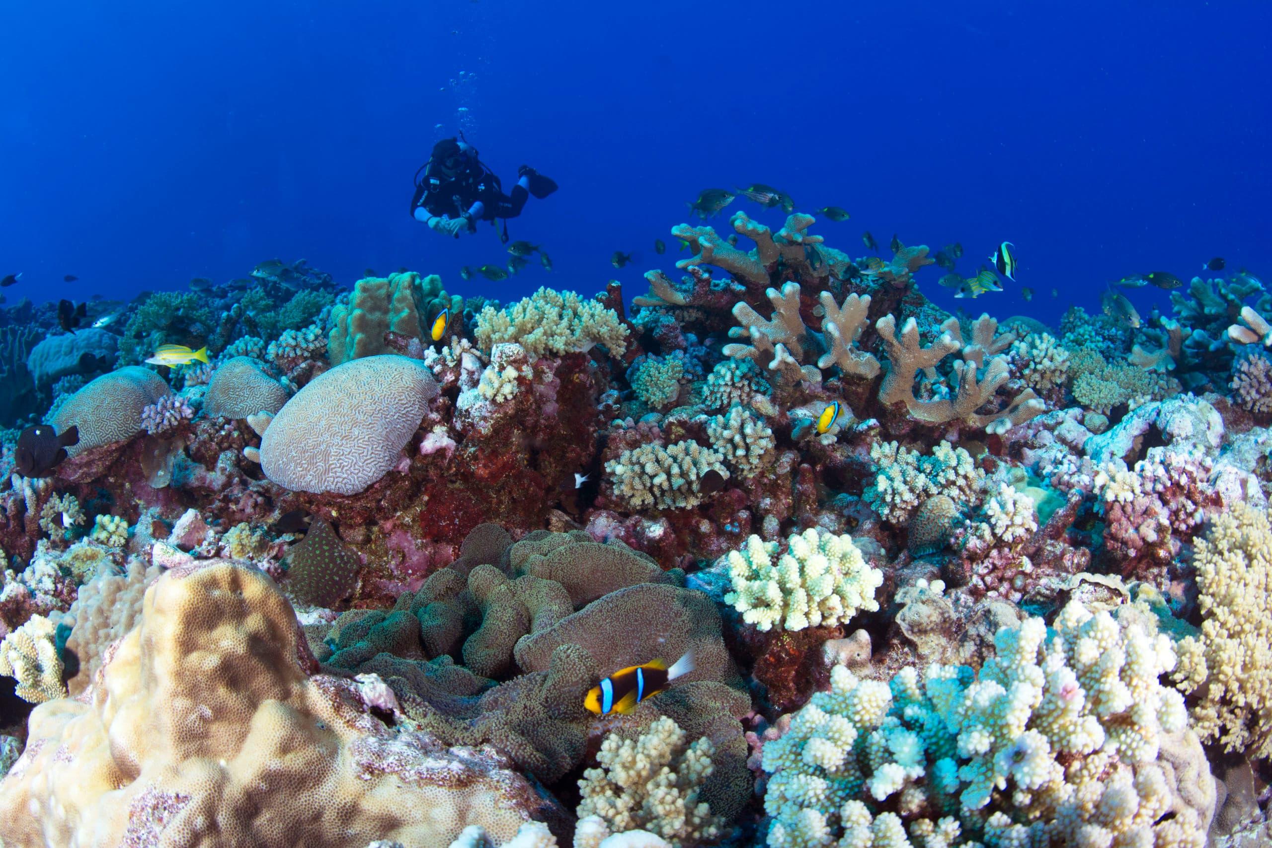 Coral Sea and Ribbon reefs