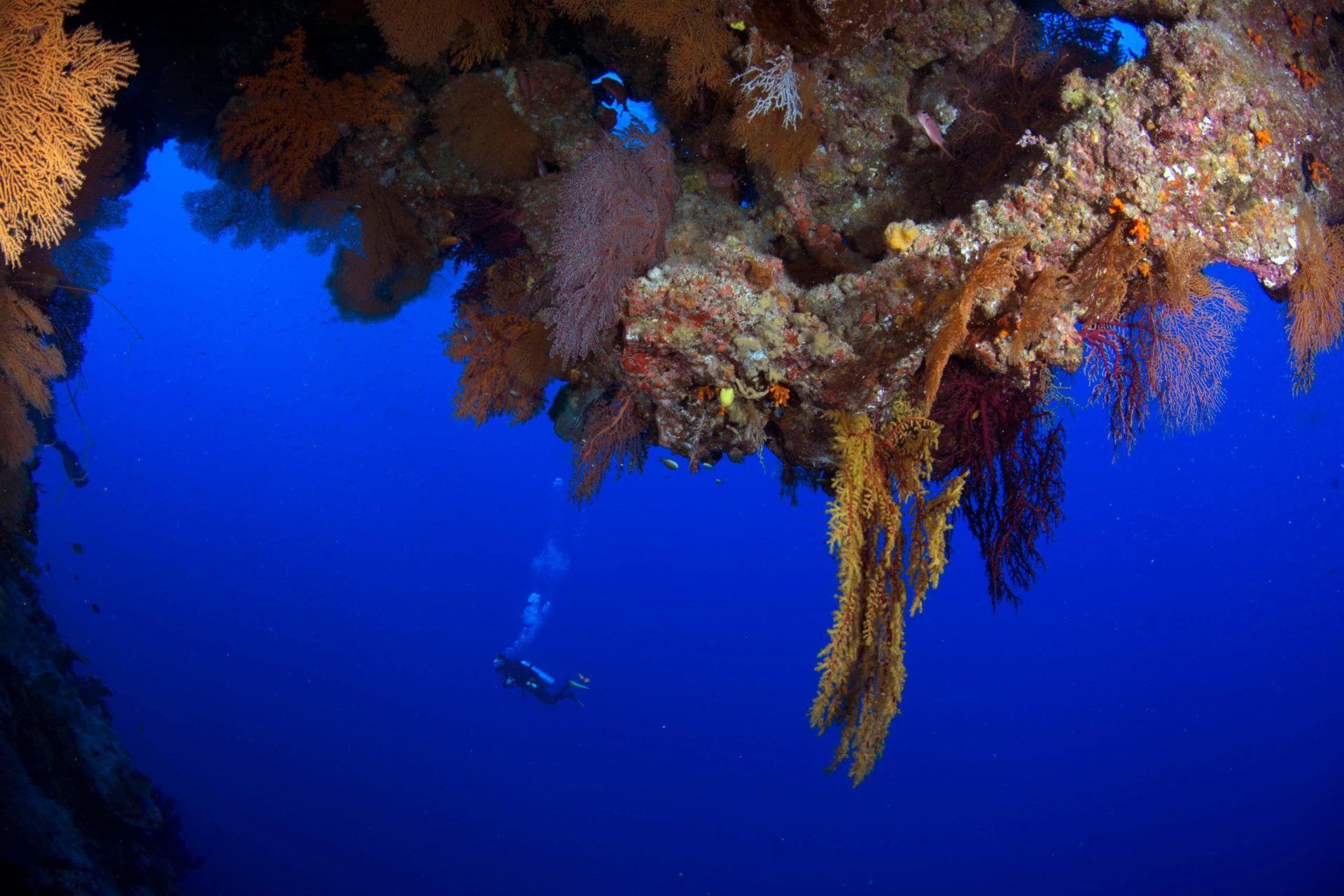 Scuba Diving The Coral Sea Cairns Part 2