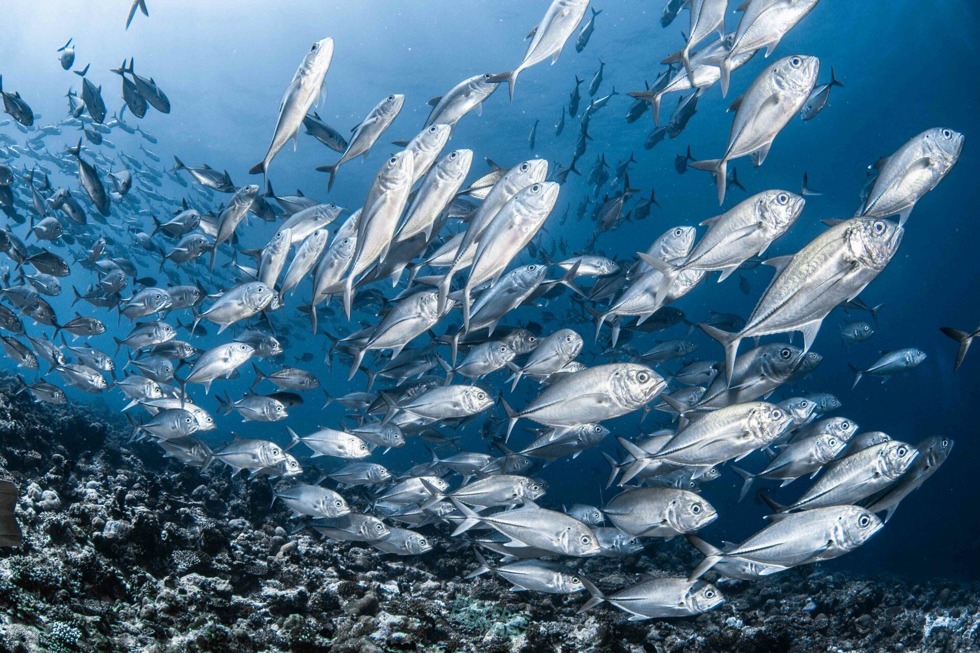 Fish School - Fish Free February