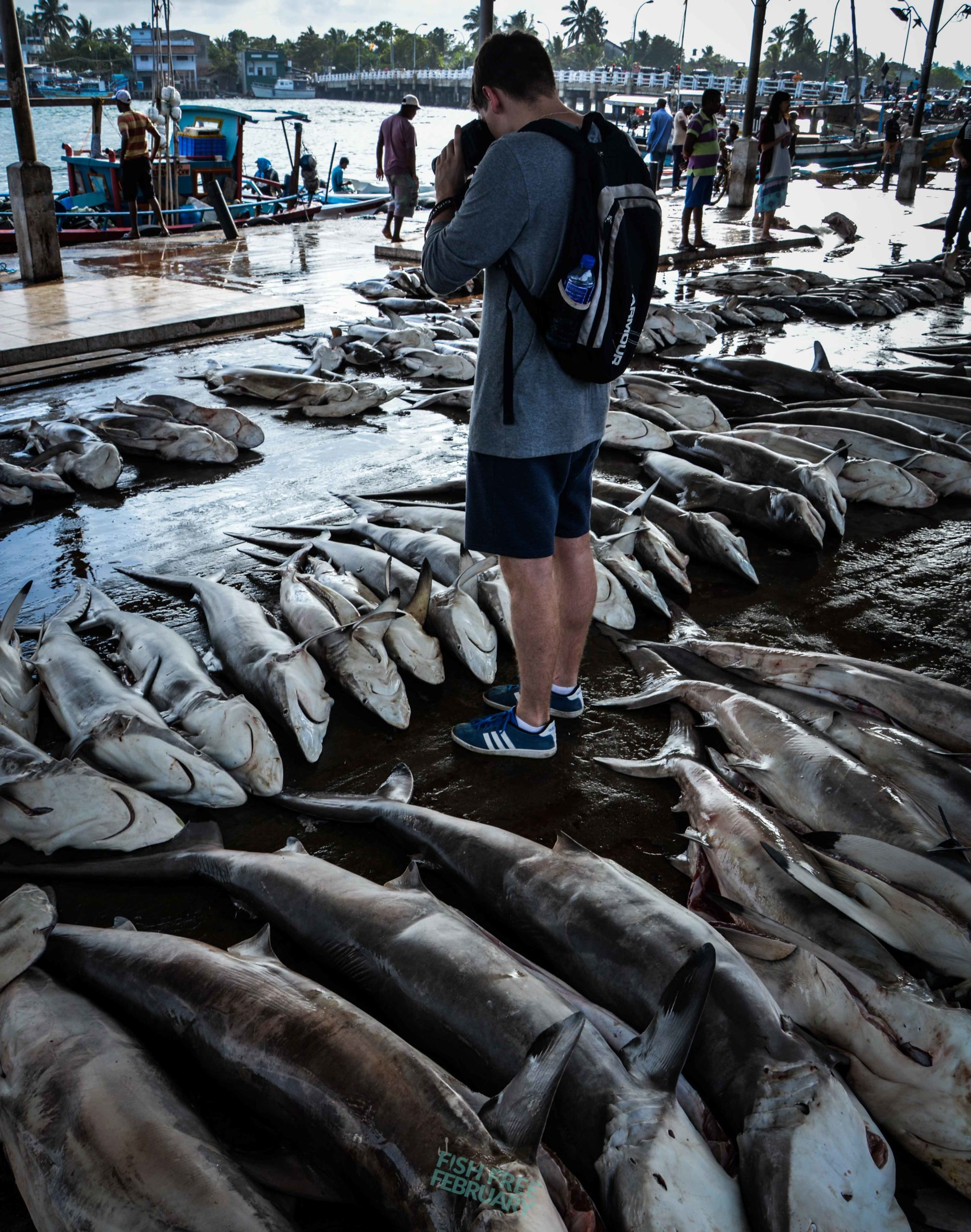Photographing Dead sharks in a fish market - Fish Free February