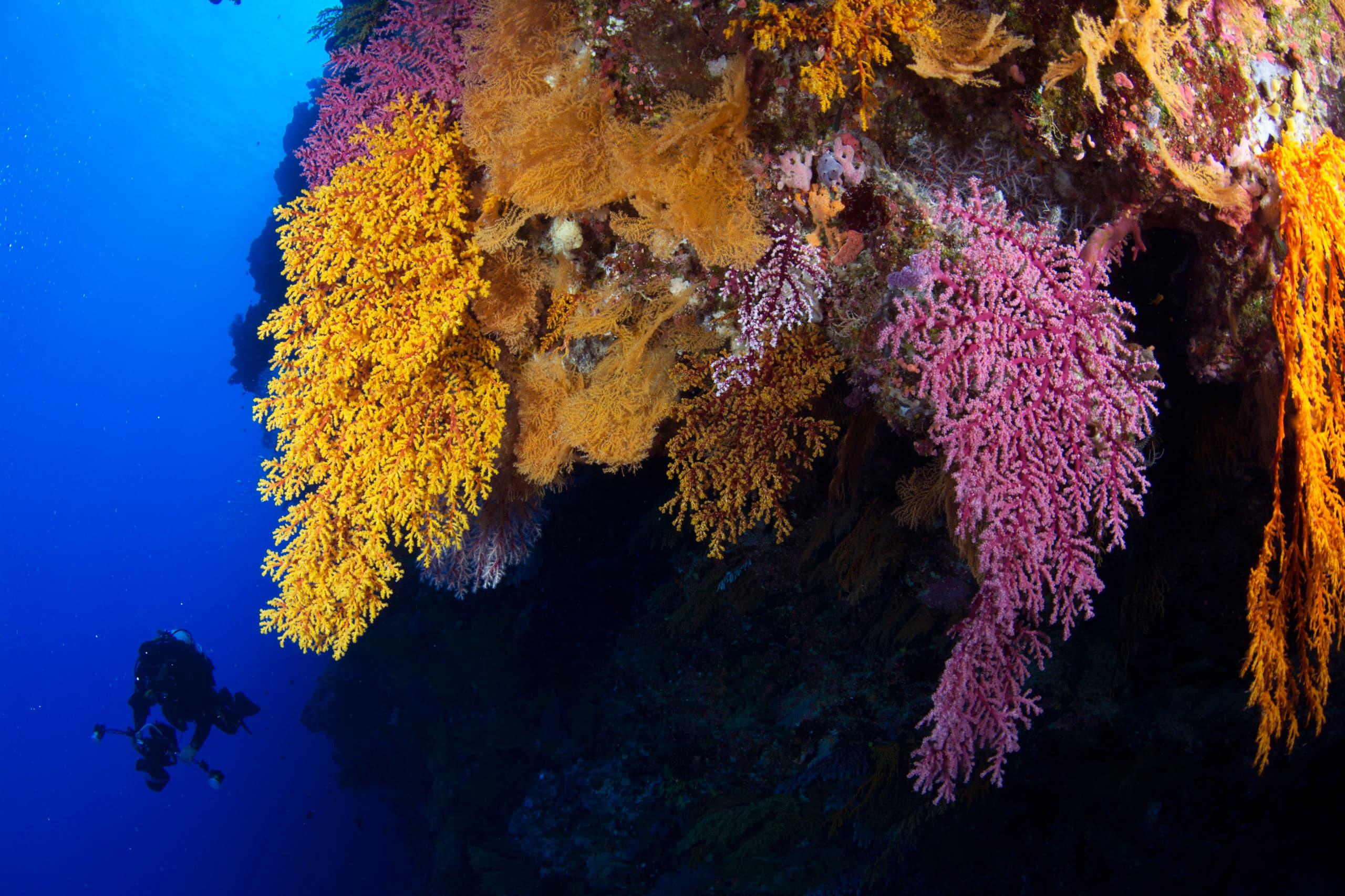 Scuba Diving The Coral Sea Cairns