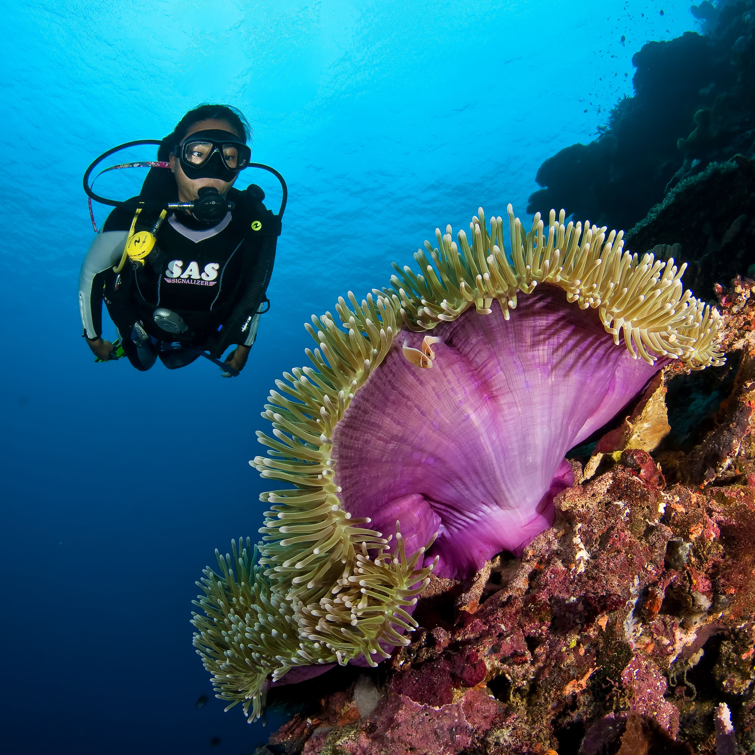 Spectacular New Guinea Island
