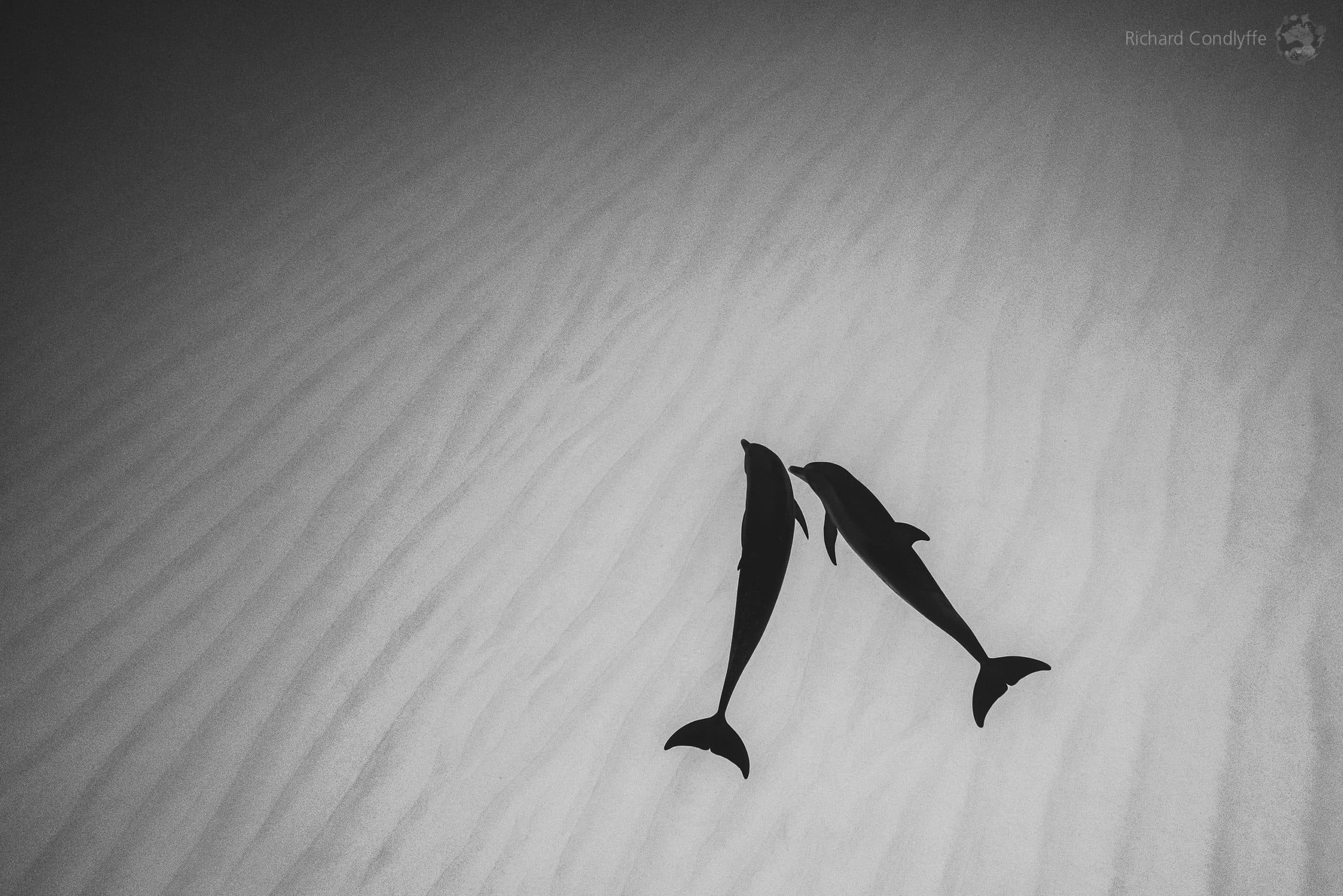 UnderWater Black And White, Richard Condlyffe