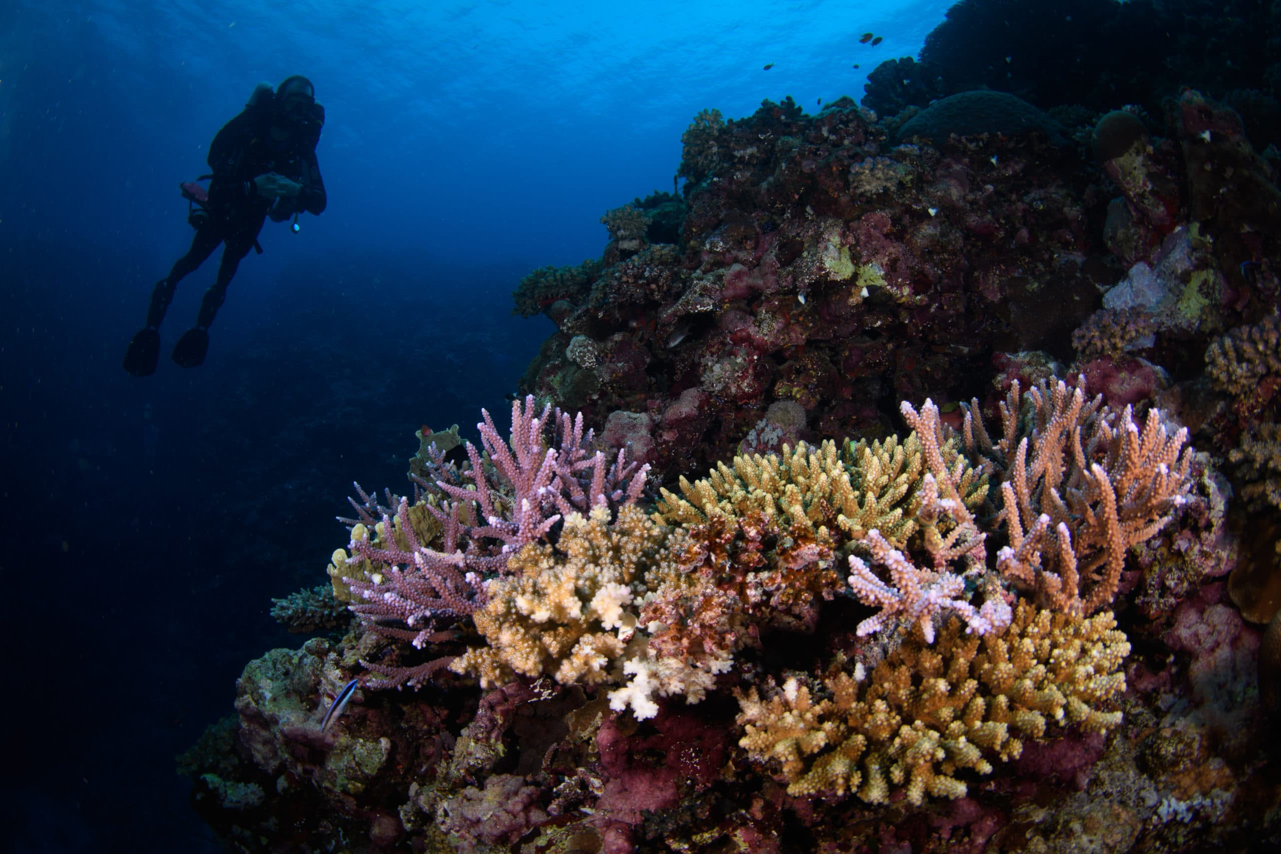 lively and colorful reefs