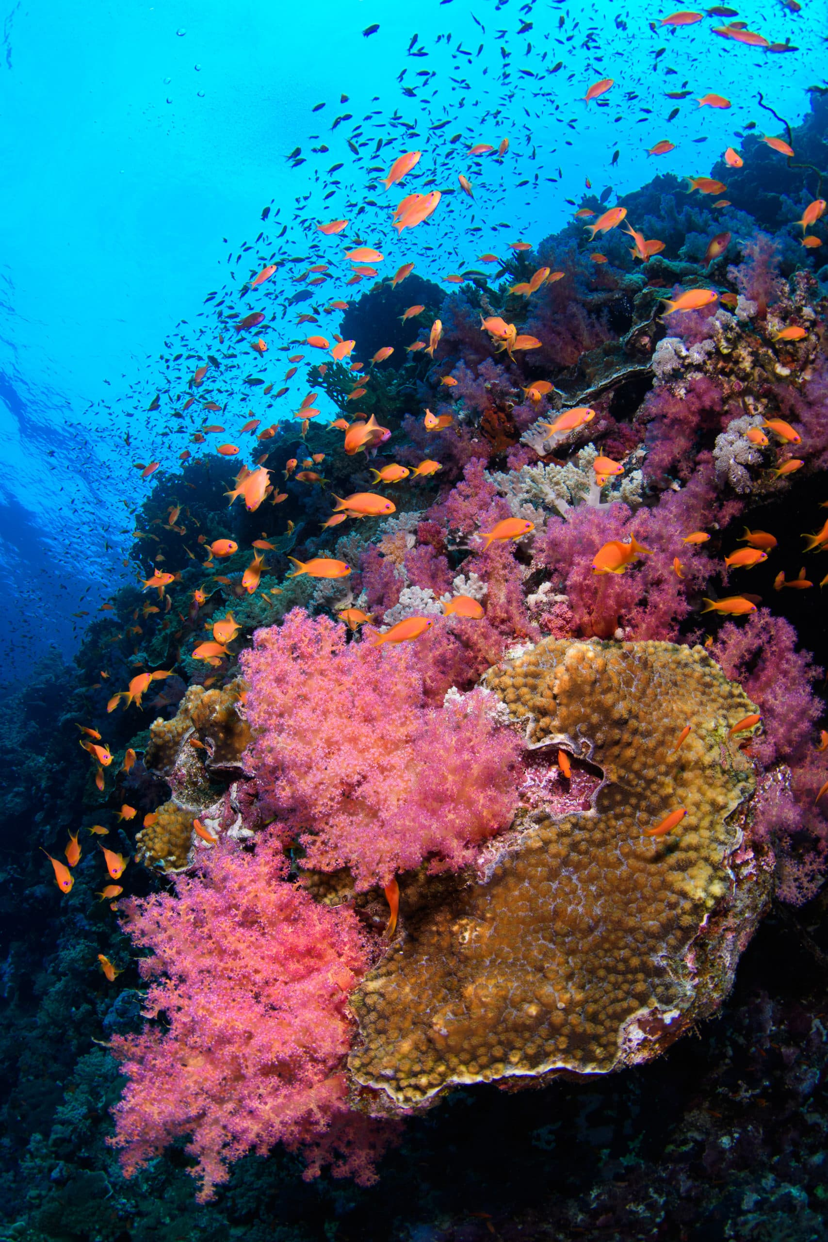 nearby reef wall