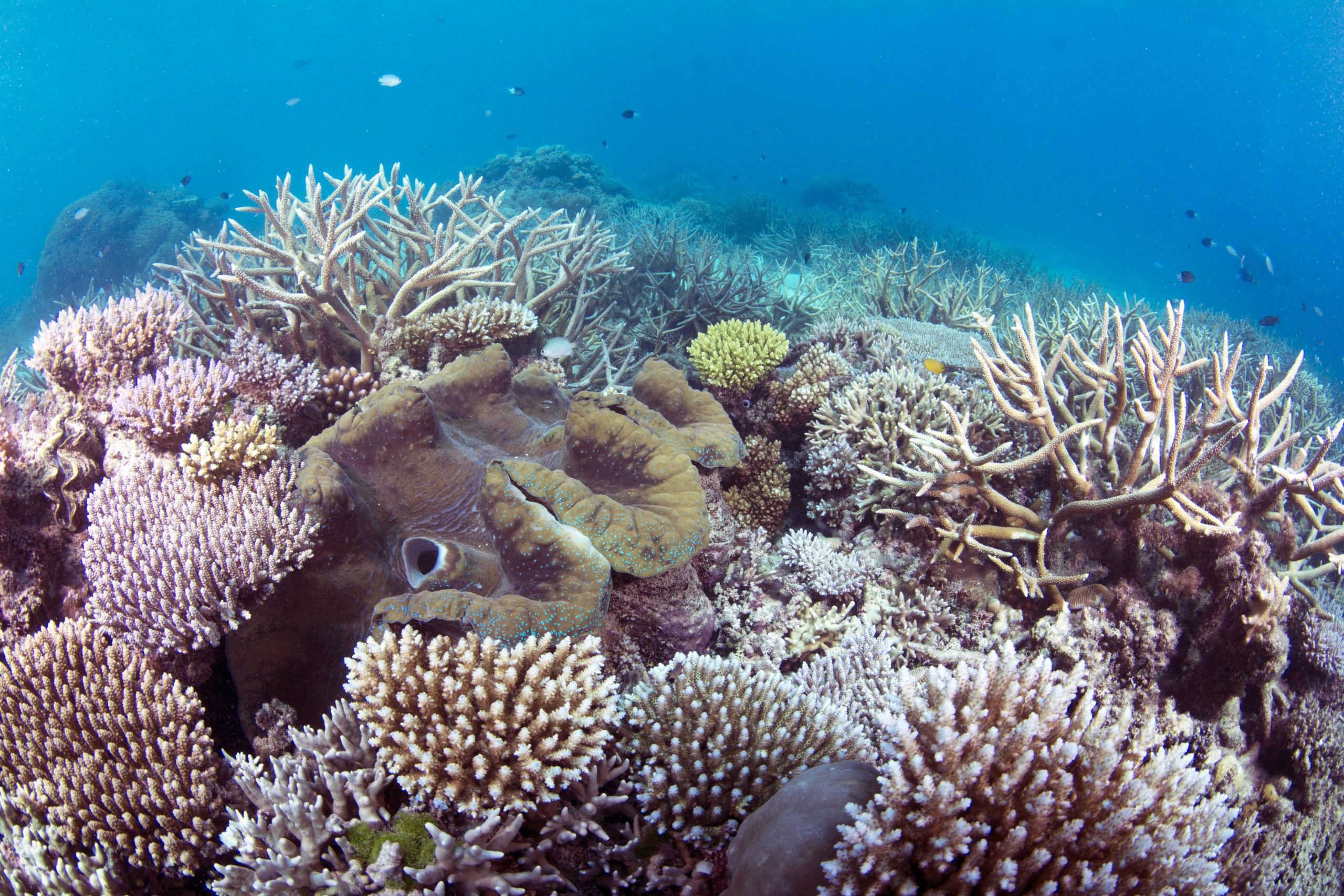 Scuba Diving the Ribbon Reefs Cairns Part 3