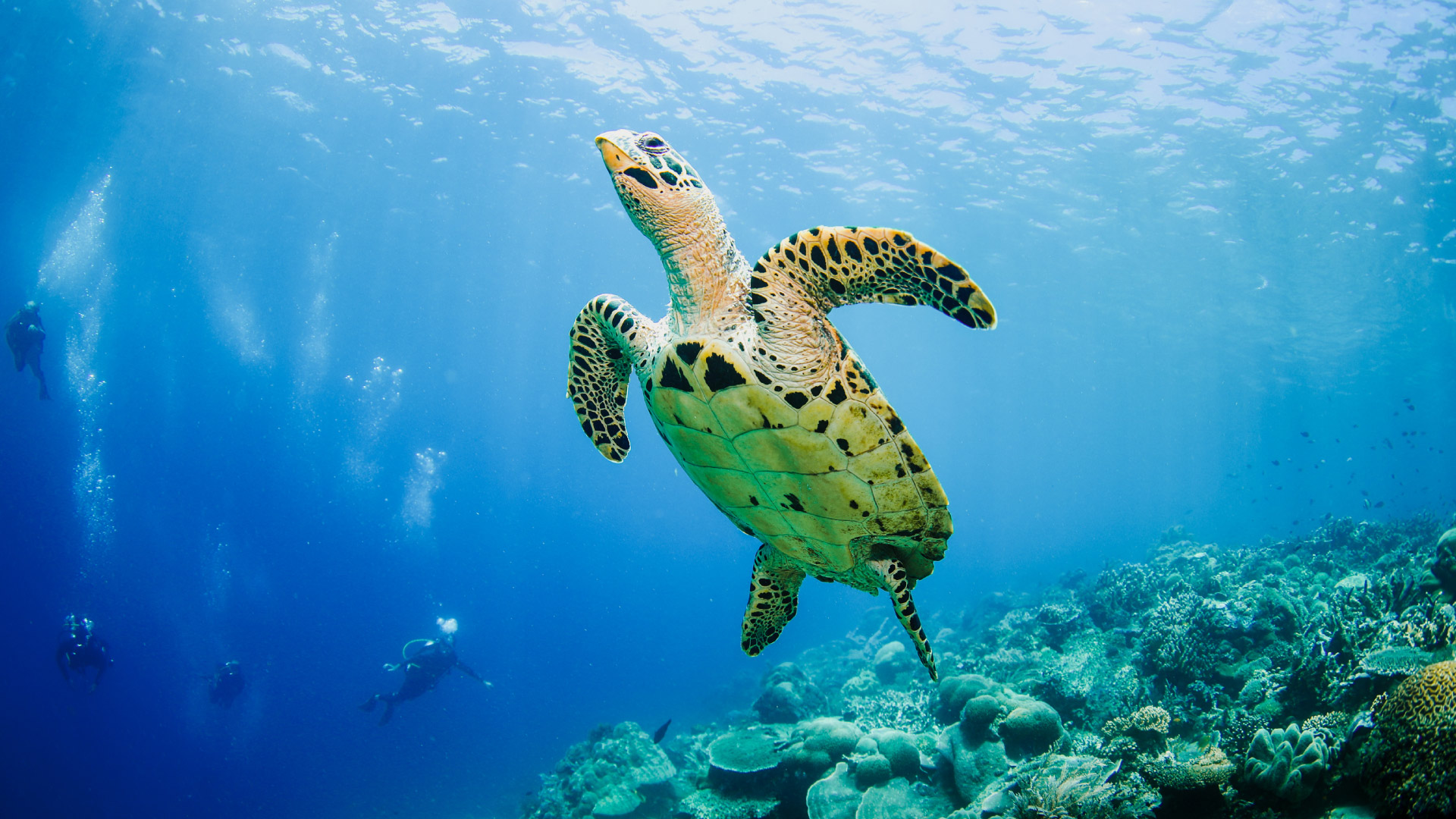 Flying Sea Turtle