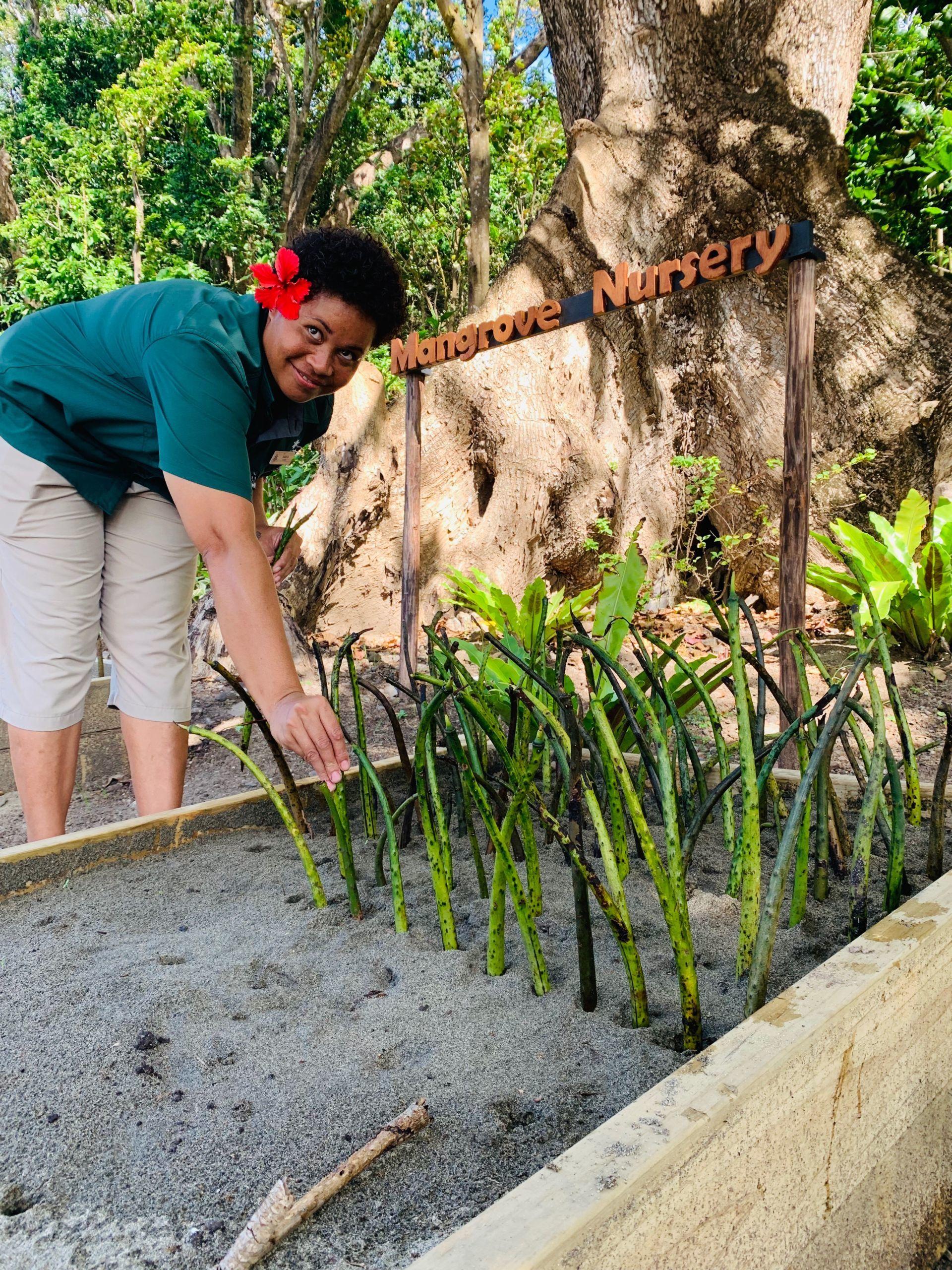 Inspiring Mangrove Reforestation Project