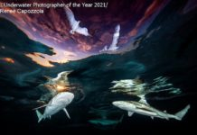 Underwater Photographer of the Year 2021 - Renee Capozzola