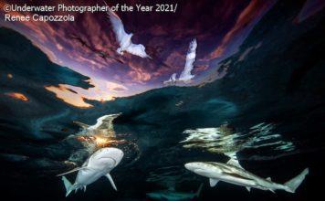 Underwater Photographer of the Year 2021 - Renee Capozzola