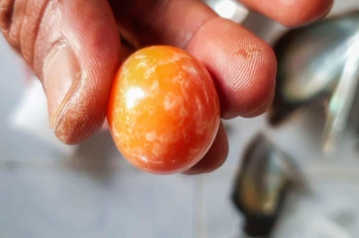 fisherman finds orange pearl