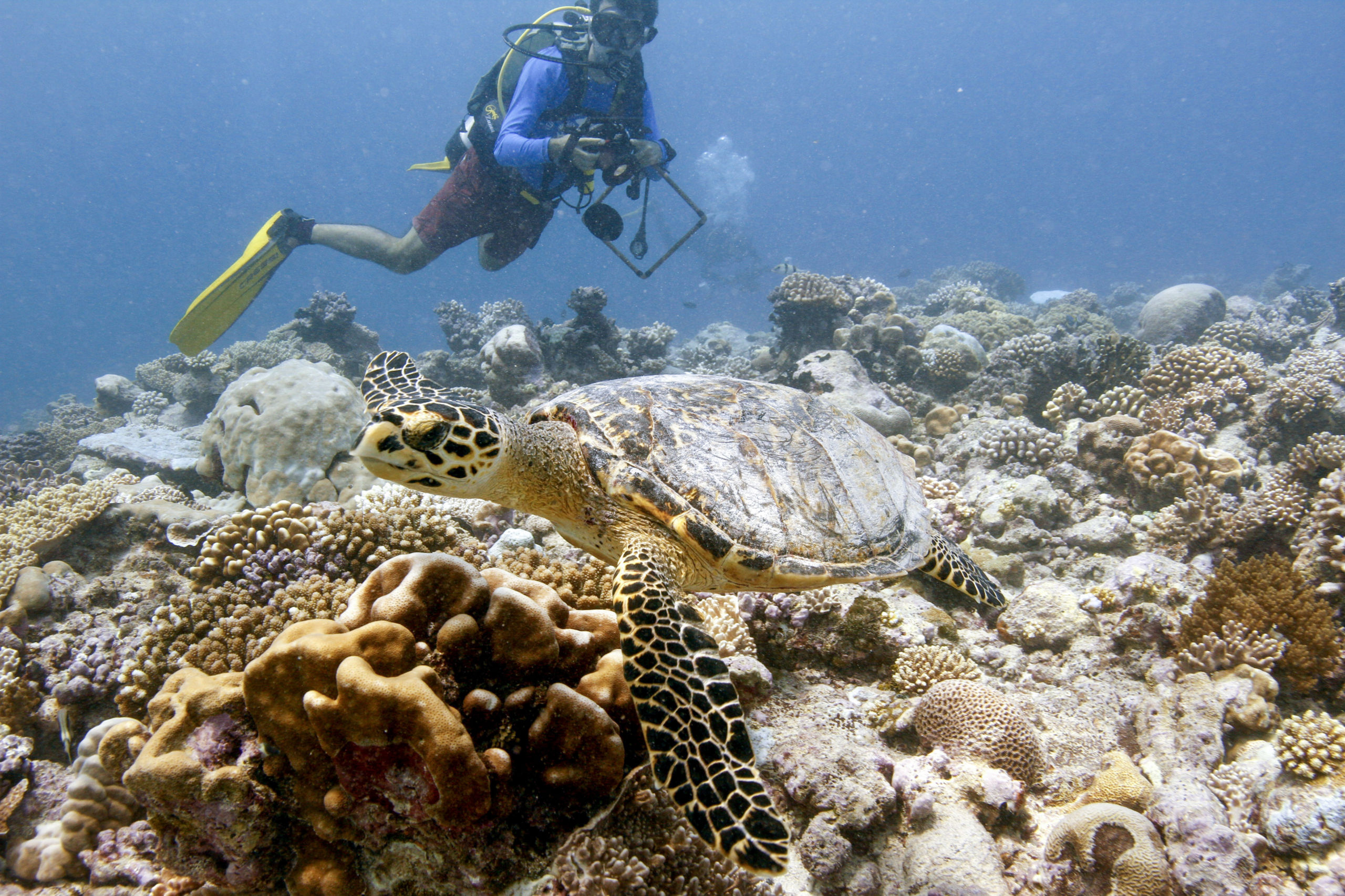 Chagos Archipelago the Last Frontier for Coral Reefs.