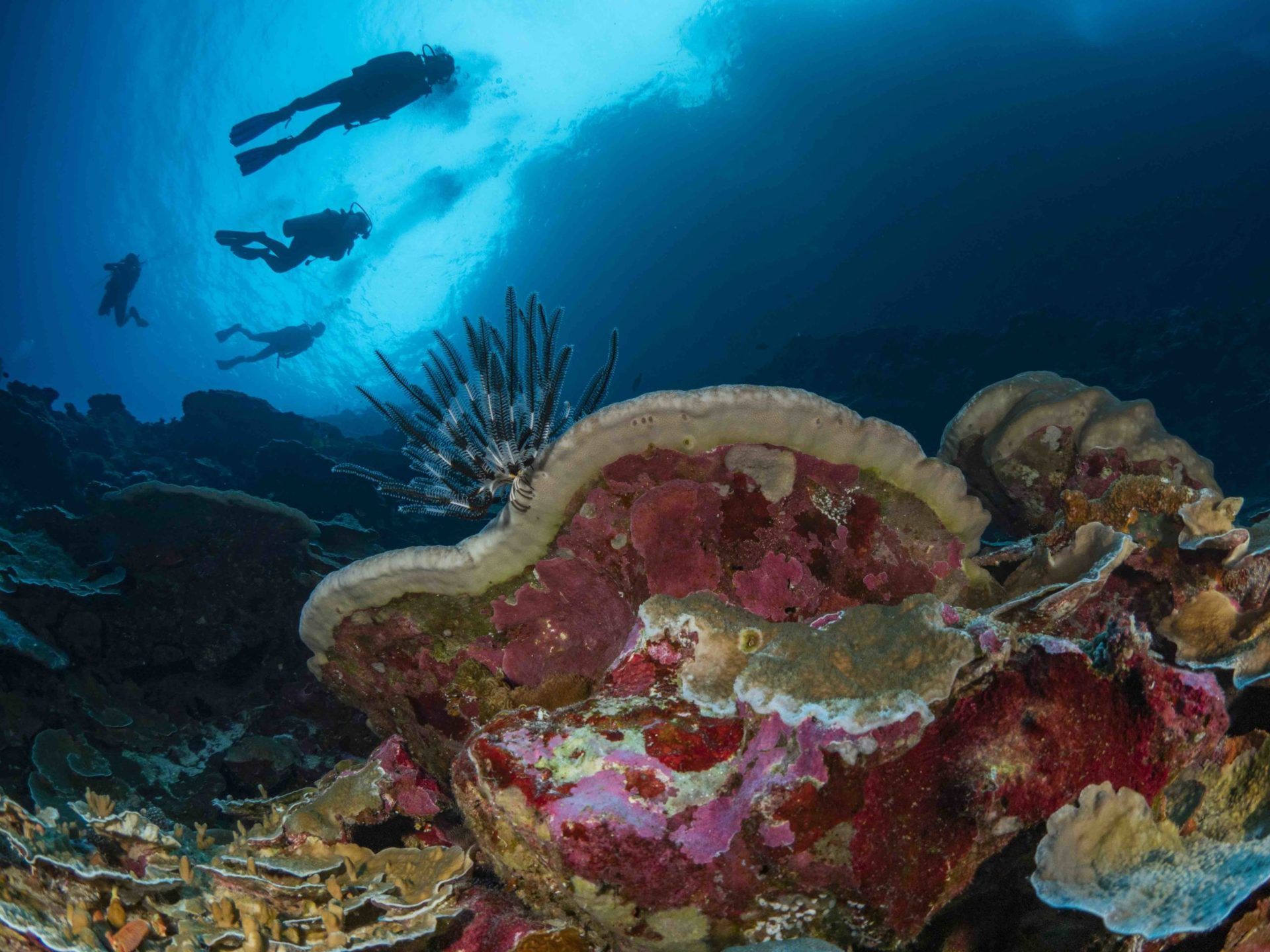 Christmas Island Diving Australia's Galapagos
