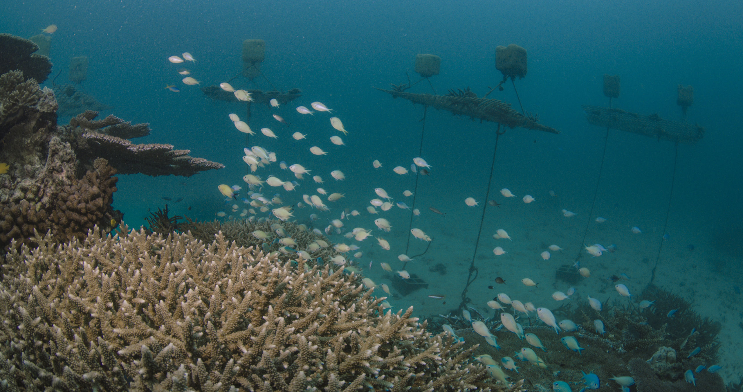Coral nurseries. Credit: Great Barrier Reef Foundation