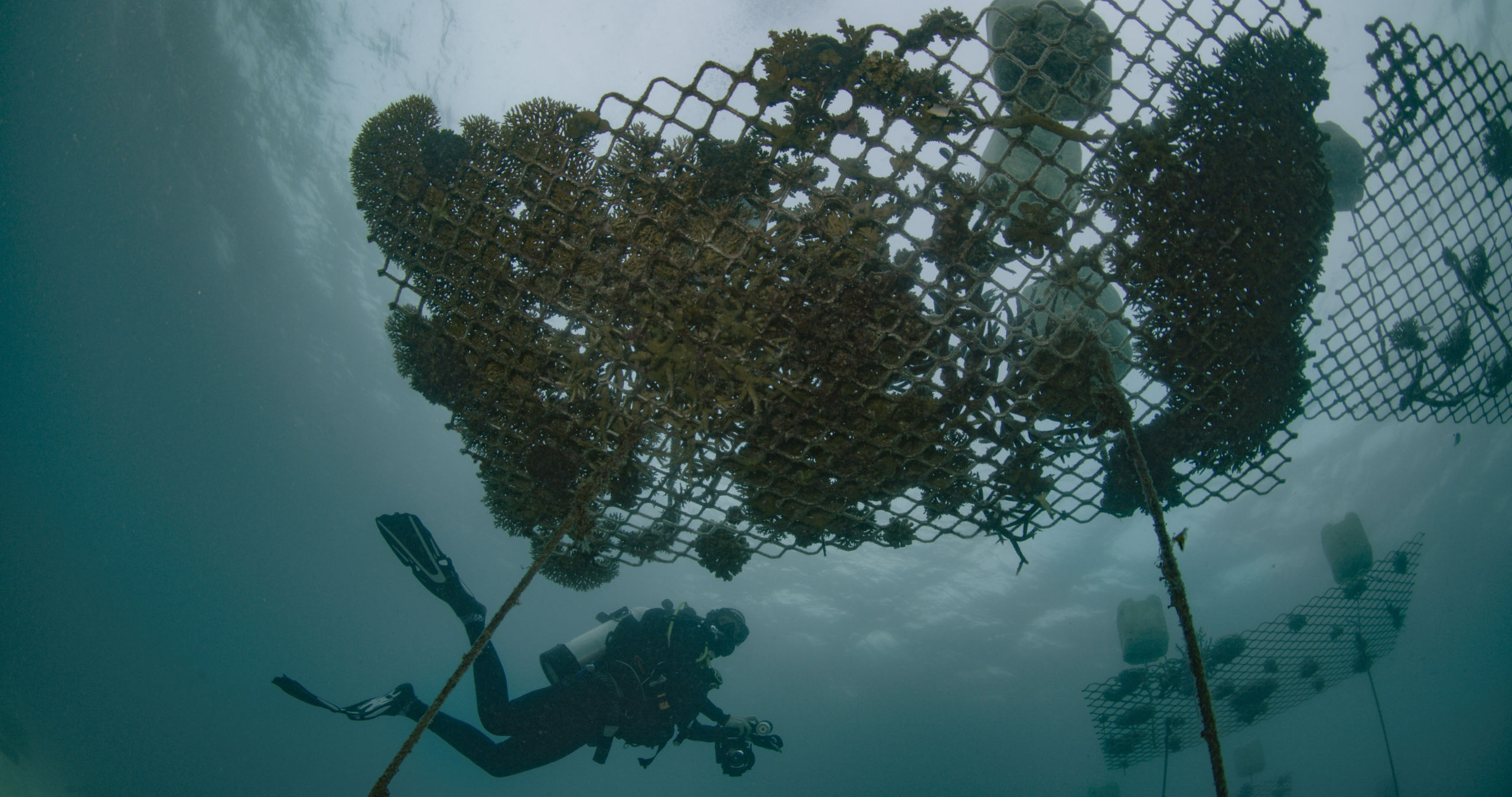 Coral nursery. Credit: Great Barrier Reef Foundation