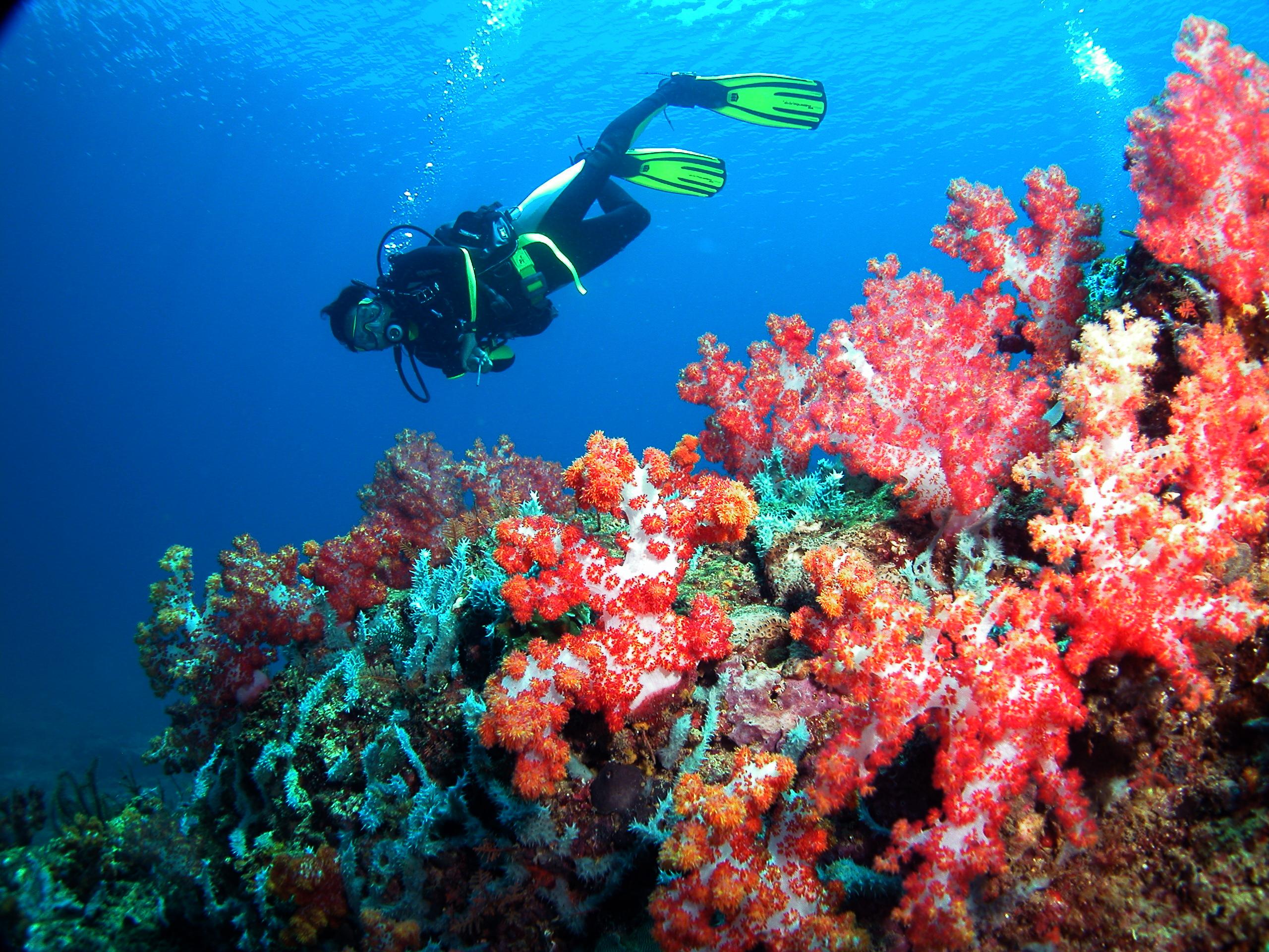 Discover Diving in Sarawak