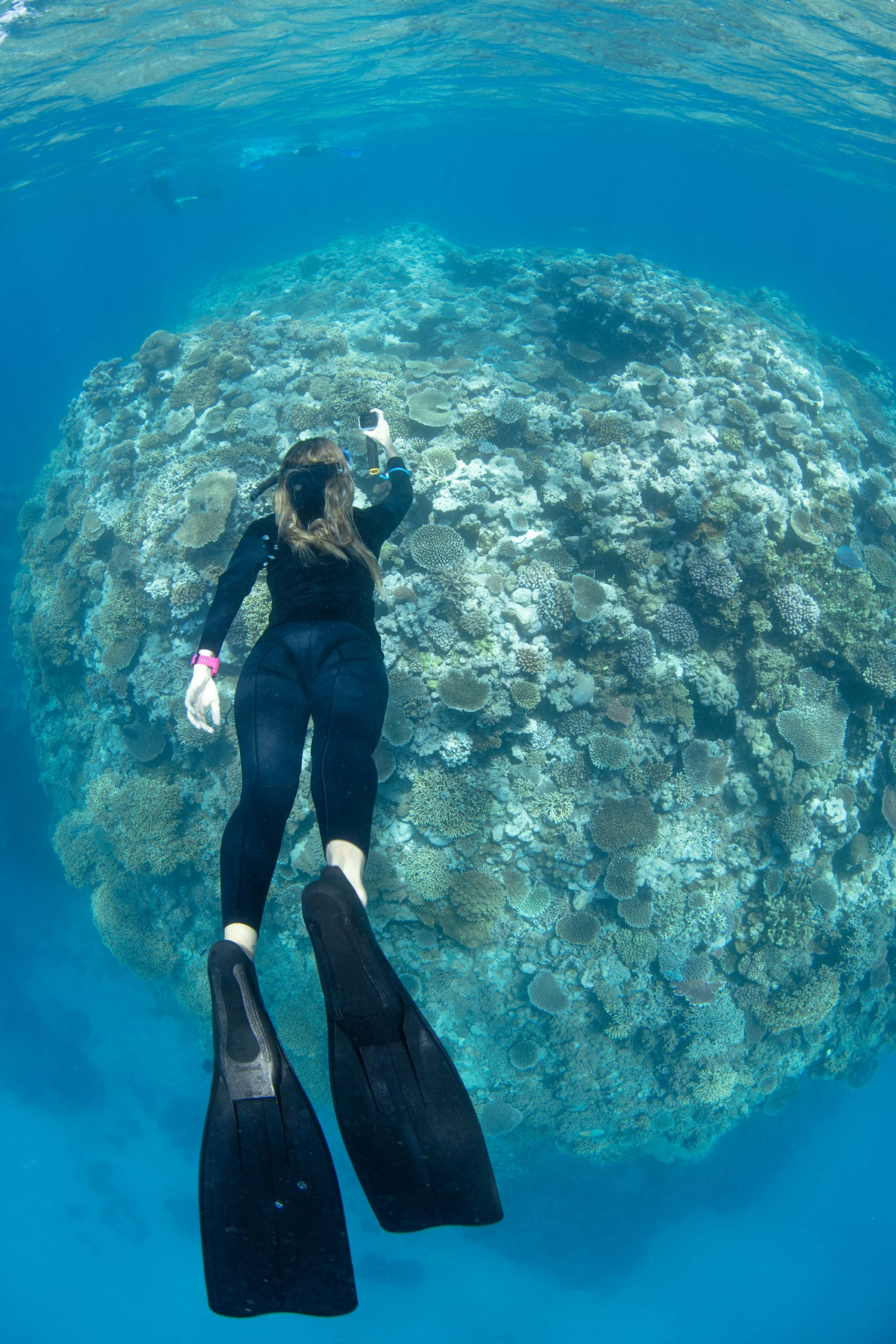 Diver Michelle Barry undertakes Great Reef Census survey. Credit: Gabriel Guzman. Underwater images