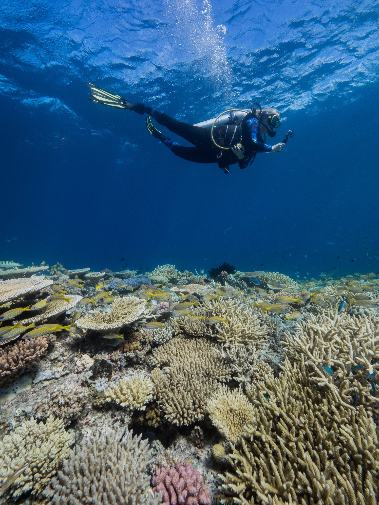 Diver taking survey photos for the Great Reef Census at the Ribbon Reefs. Credit: Harriet Spark. Grumpy Turtle Creative