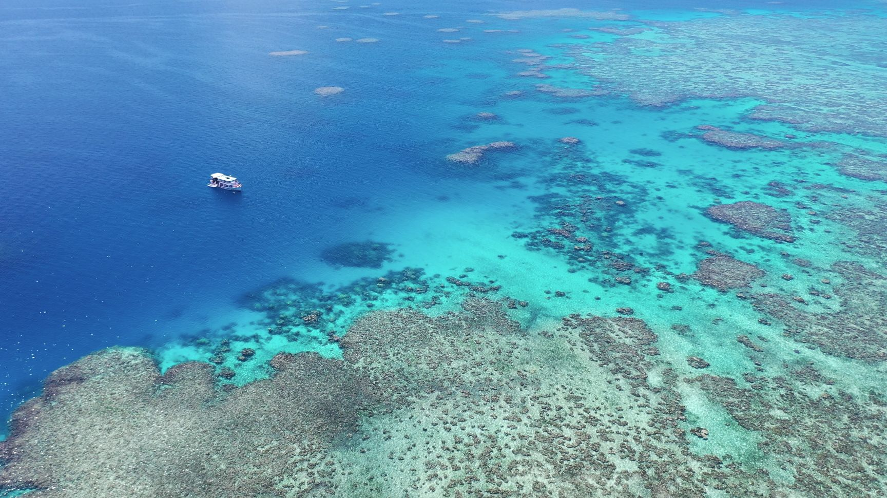Great Reef Census expedition with Coral Sea Foundation on vessel Kalinda. Credit: Tony Ayling. Coral Sea Foundation