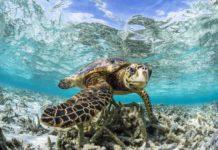Sustainability Initiatives at COMO Cocoa Island and COMO Maalifushi