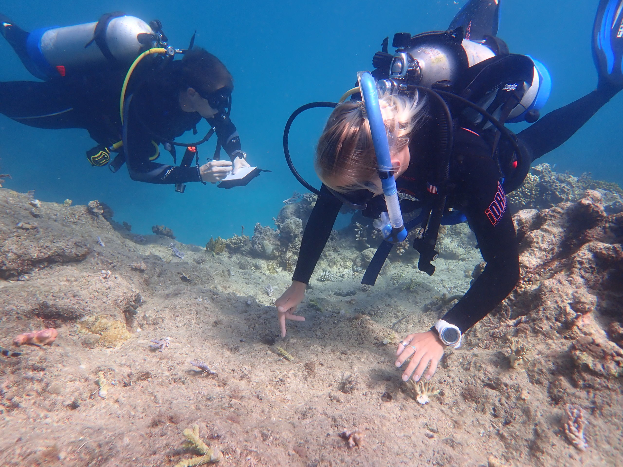 Out planting coral on Opal Reef. Credit: Wavelength Reef Cruises