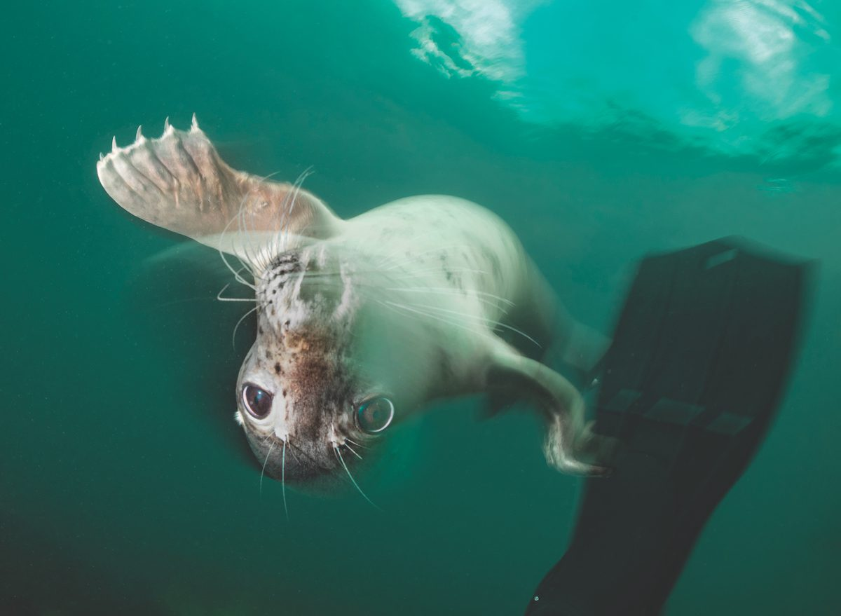 Photography Tips For Diving With Seals