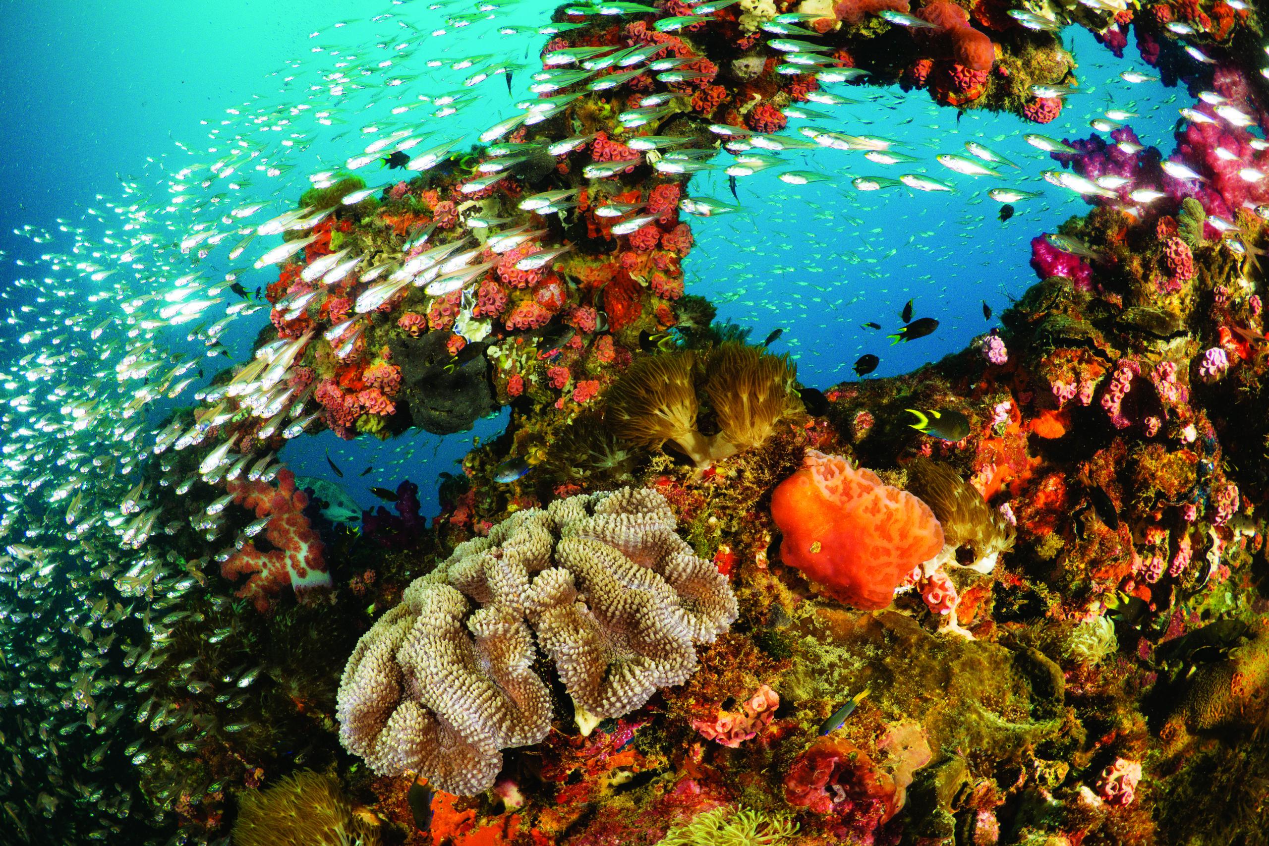 5 Unique Great Barrier Reef Dives