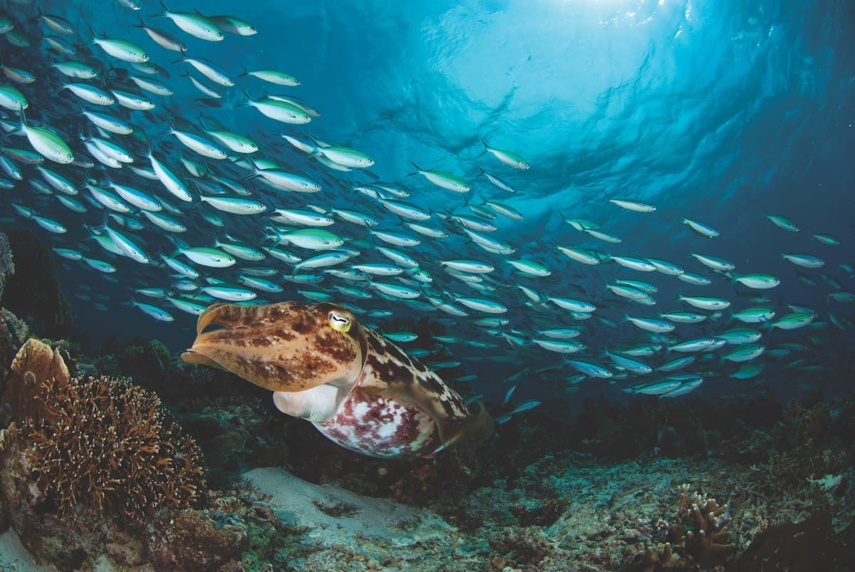 diving in Komodo 1