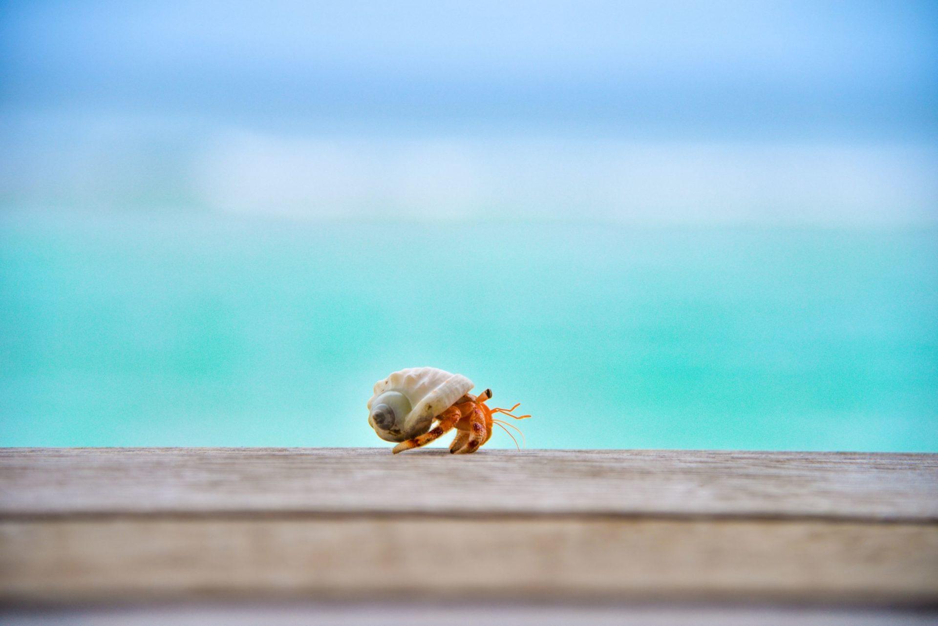 Intriguing Hermit Crabs