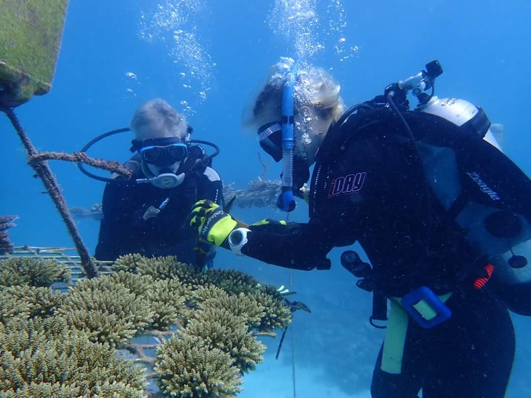 Divers on the Nurseries. Wavelength Reef Cruises