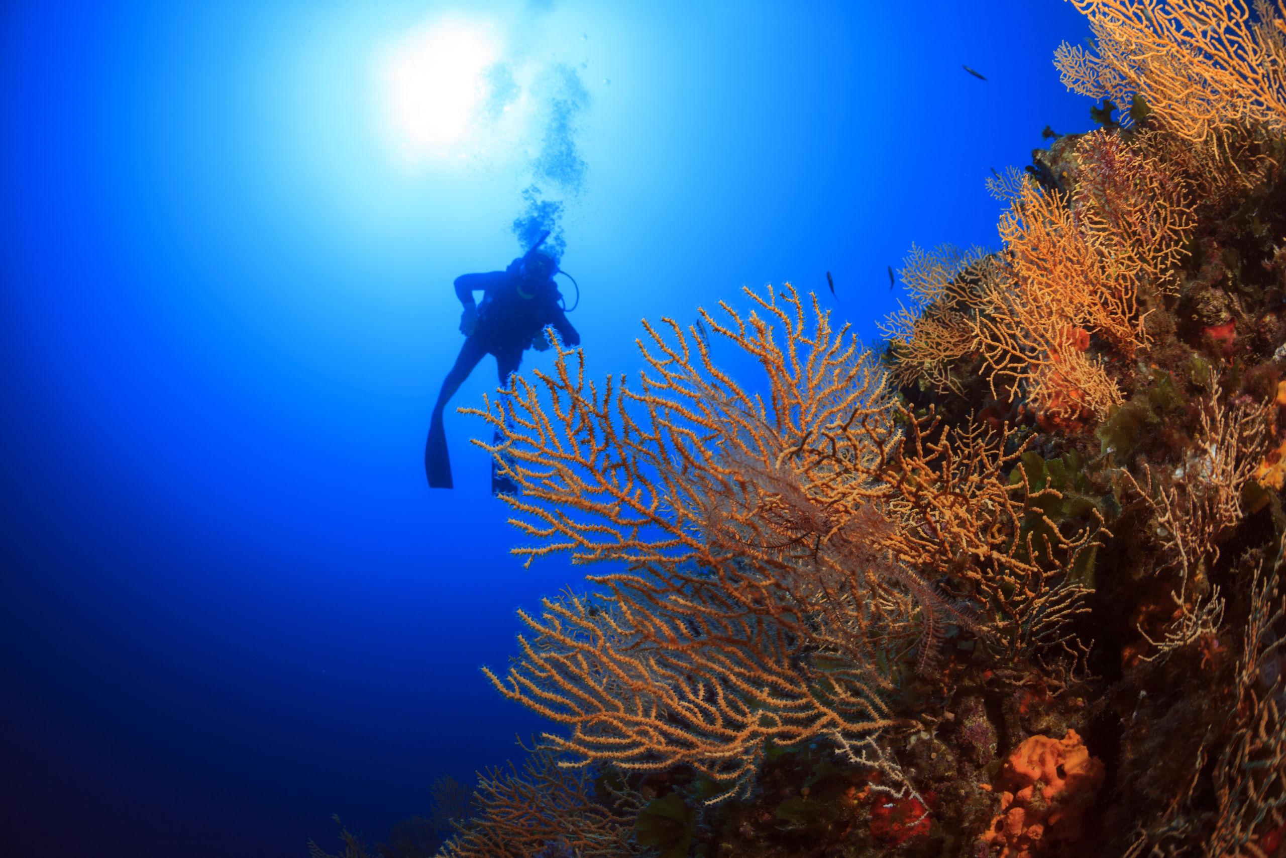 Dive Into Regenerative Travel