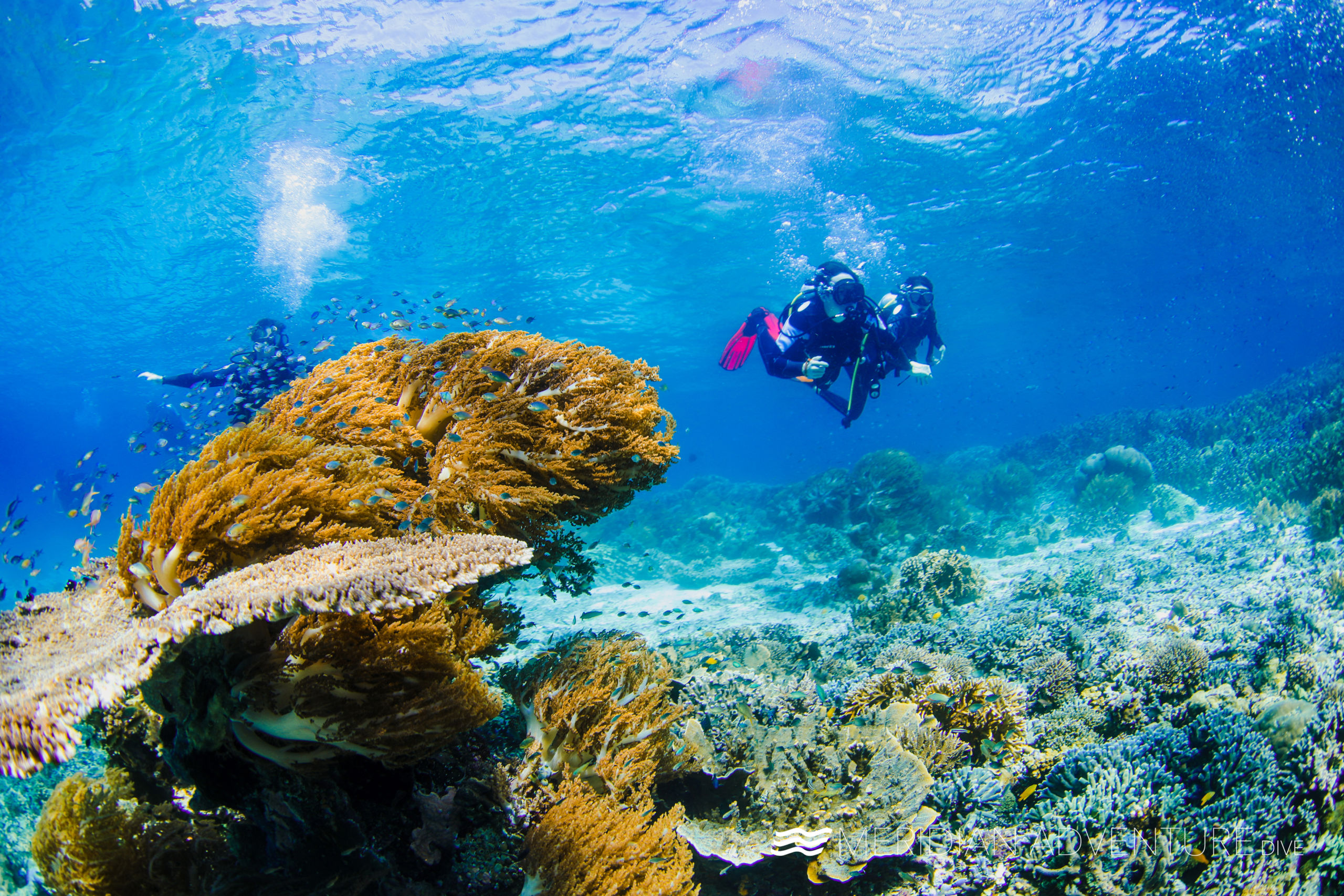 Diving Raja Ampat Indonesia