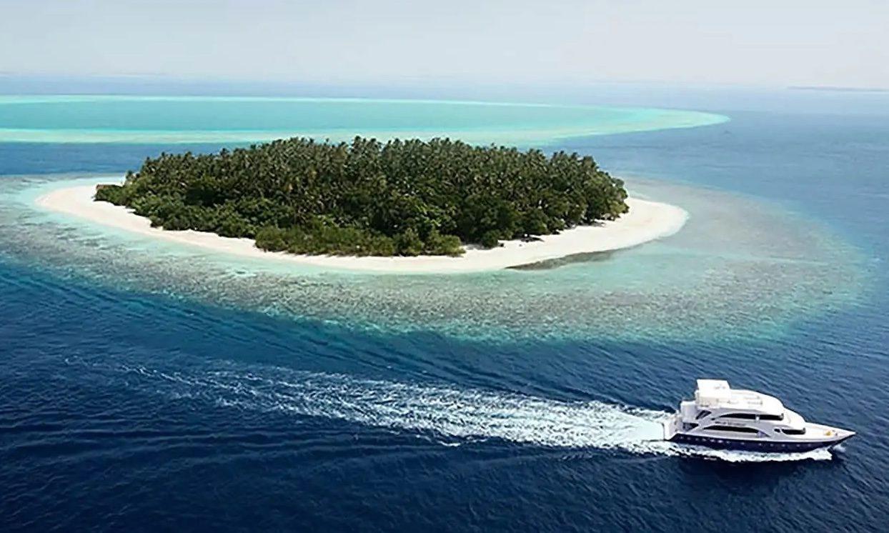 Dugongs 1
