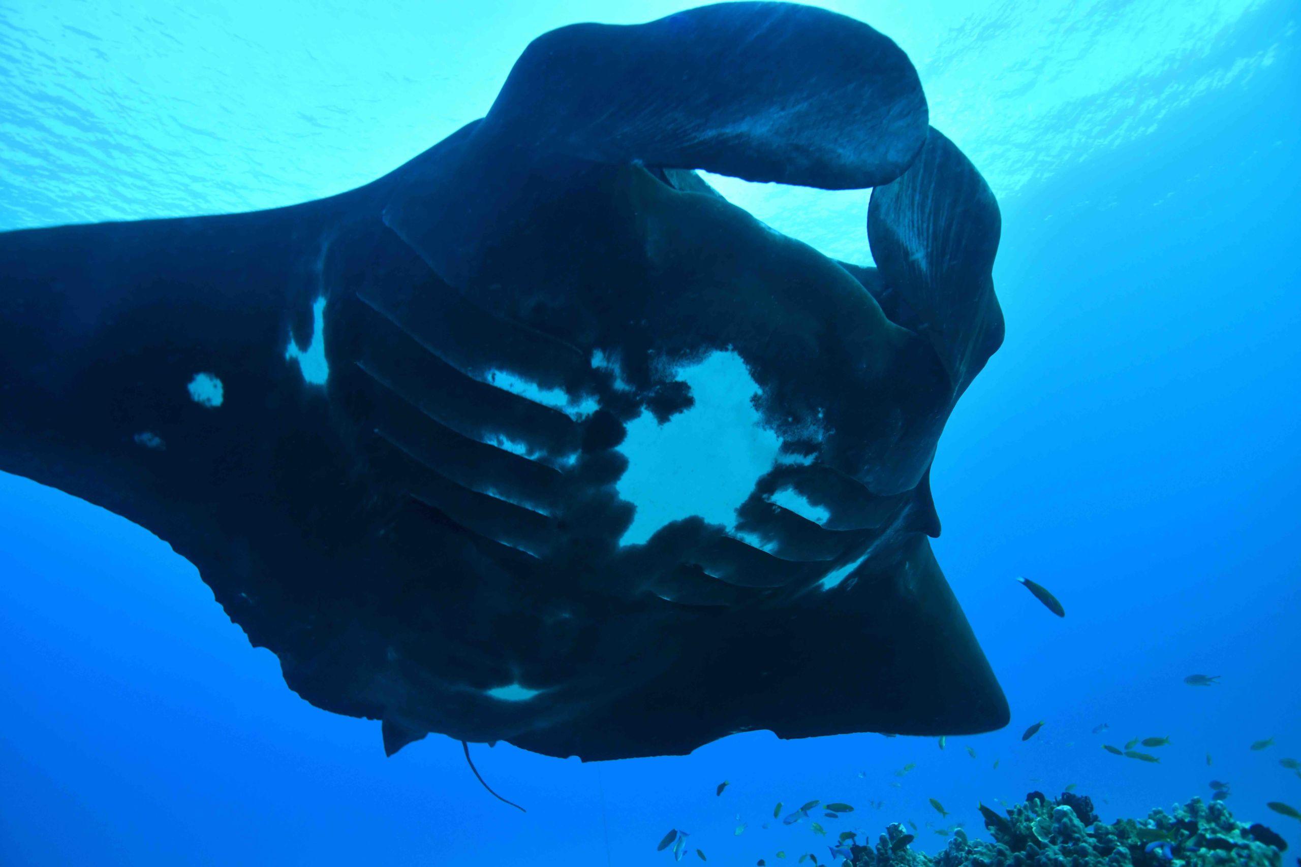 Australias Best 6 BIG Marine Encounters
