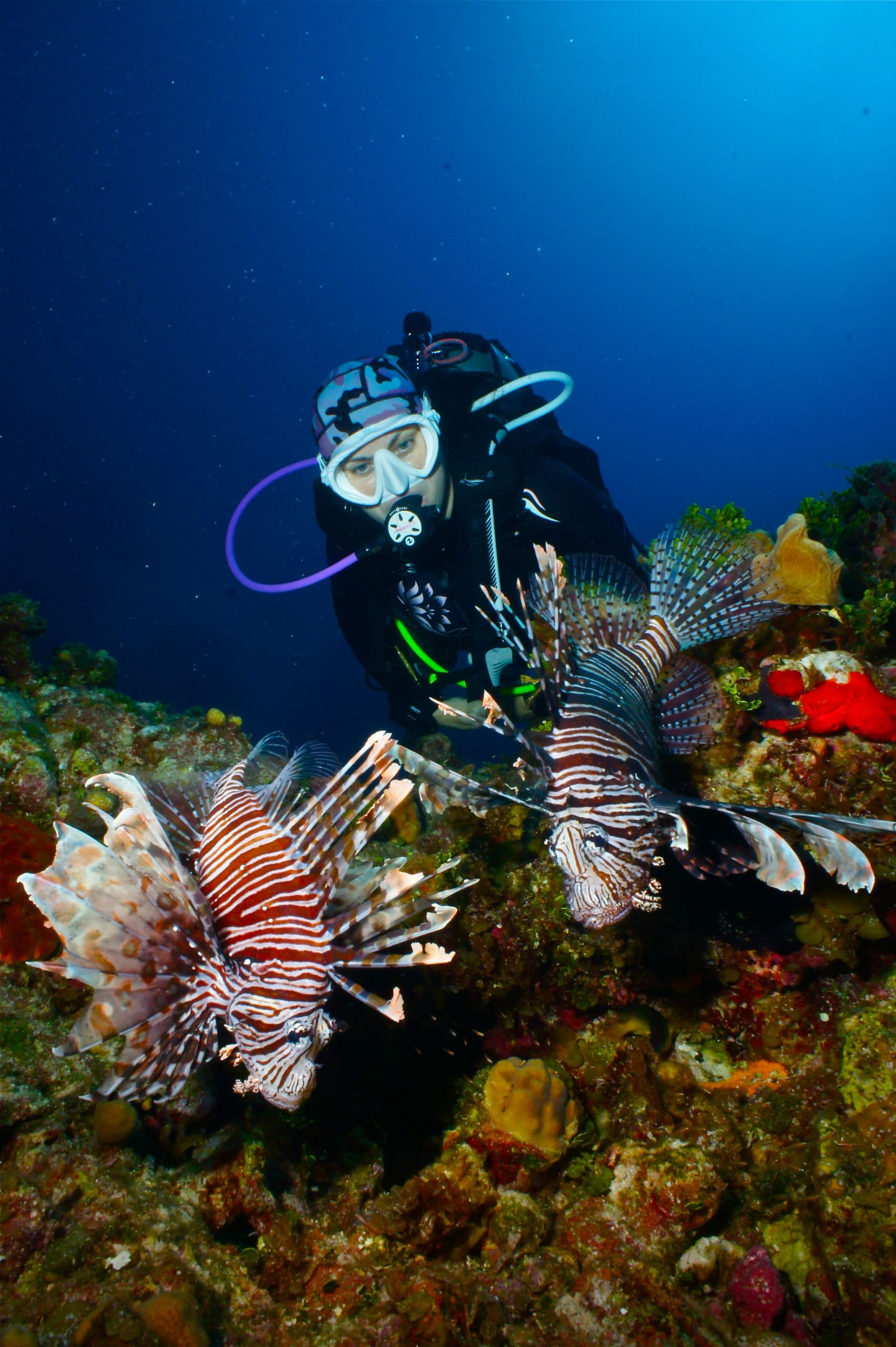 Lionfish have invaded the Caribbean