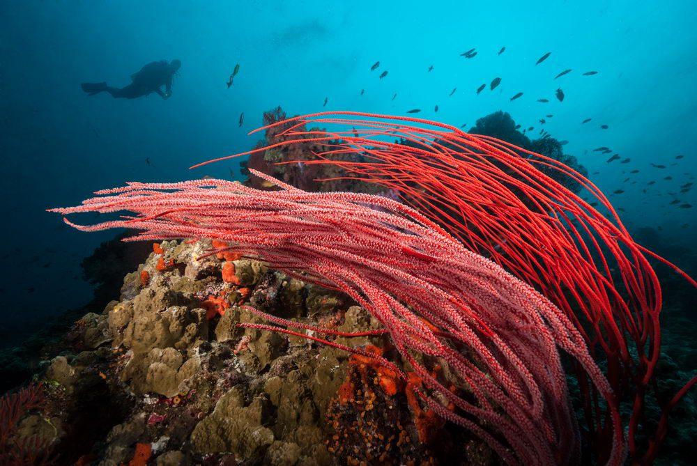 Discovering New Dive Sites Volivoli Beach Resort