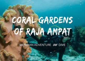 The Stunning Coral Gardens of Raja Ampat