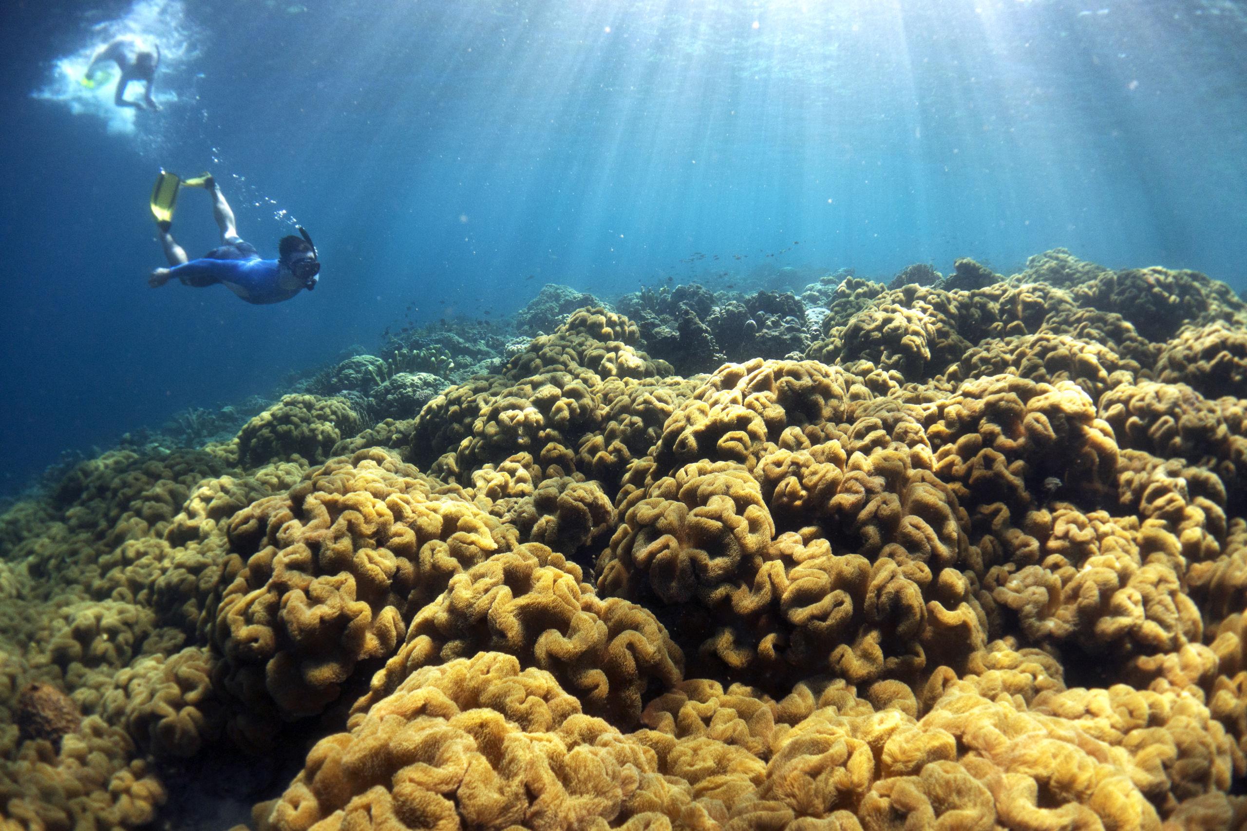 Sensational Solomon Island