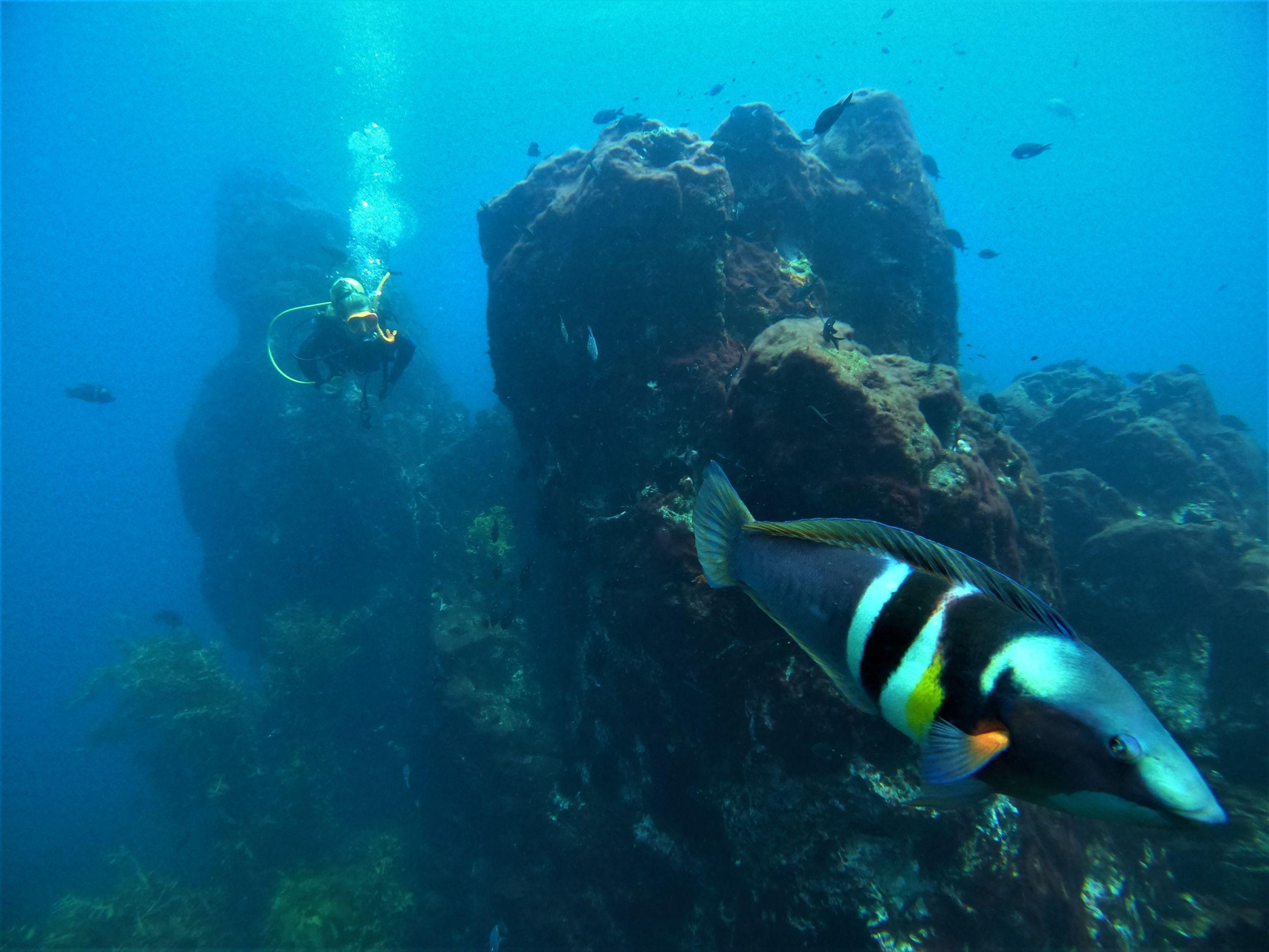 Scuba Diving the Eastern Coromandel