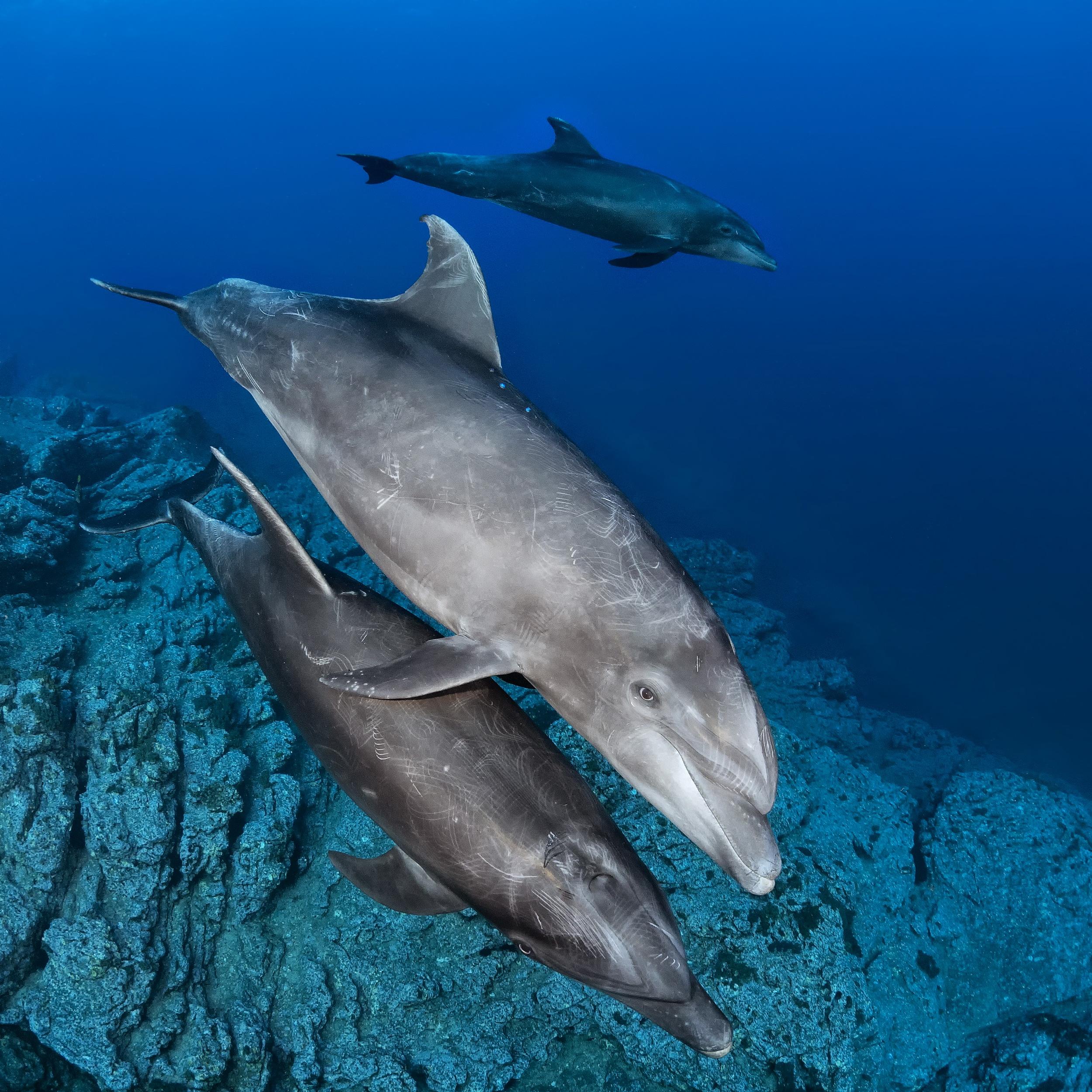 Diving Breathtaking Socorro