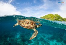 5 Philippine Dive Spots That Are Now Open