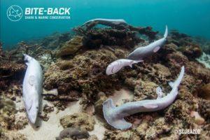 UK shark-fin trade 'dead in the water'